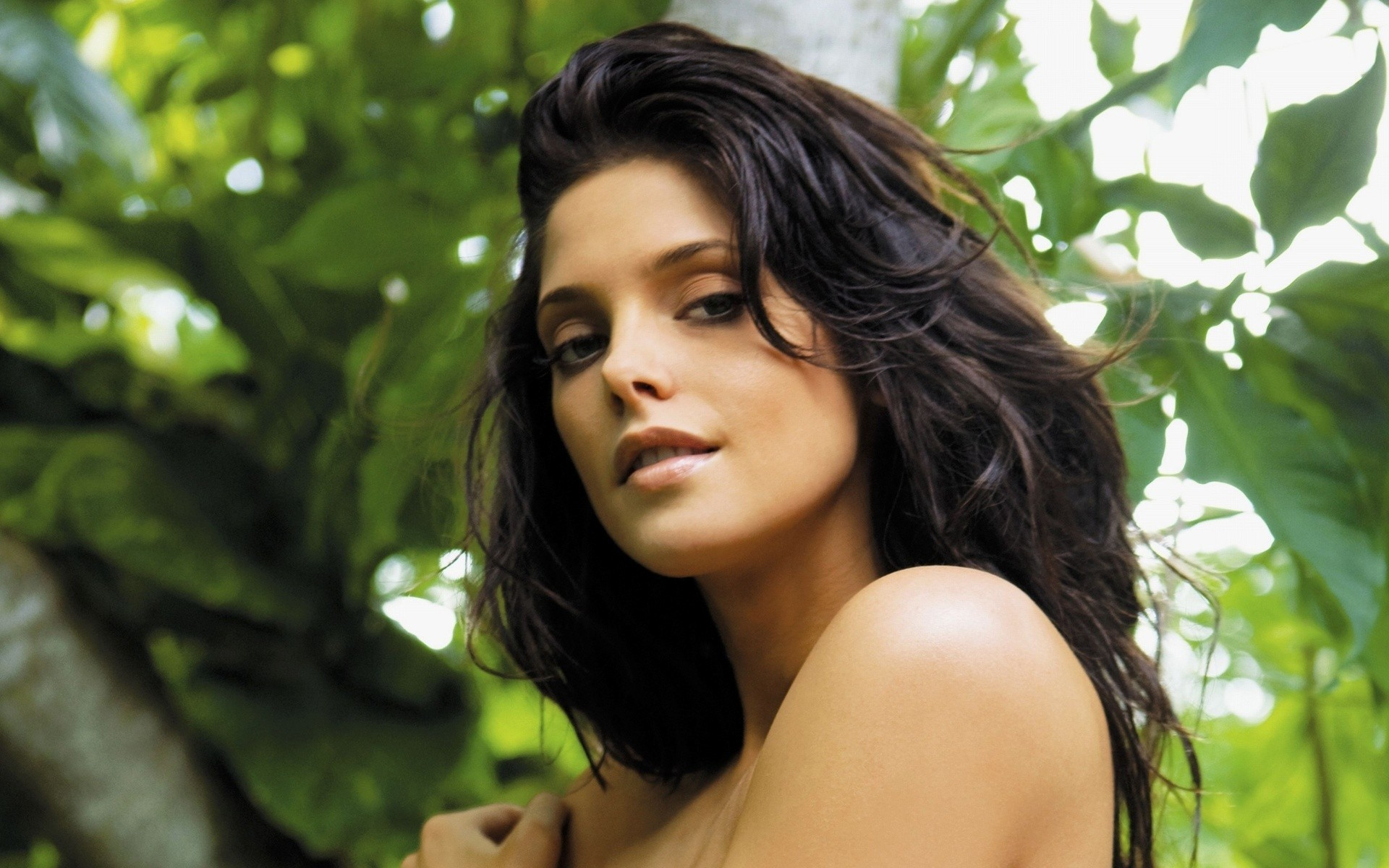 Star Celebrity Wallpapers Ashley Greene Hd Wallpapers: Ashley Greene PIC, HD Celebrities, 4k Wallpapers, Images