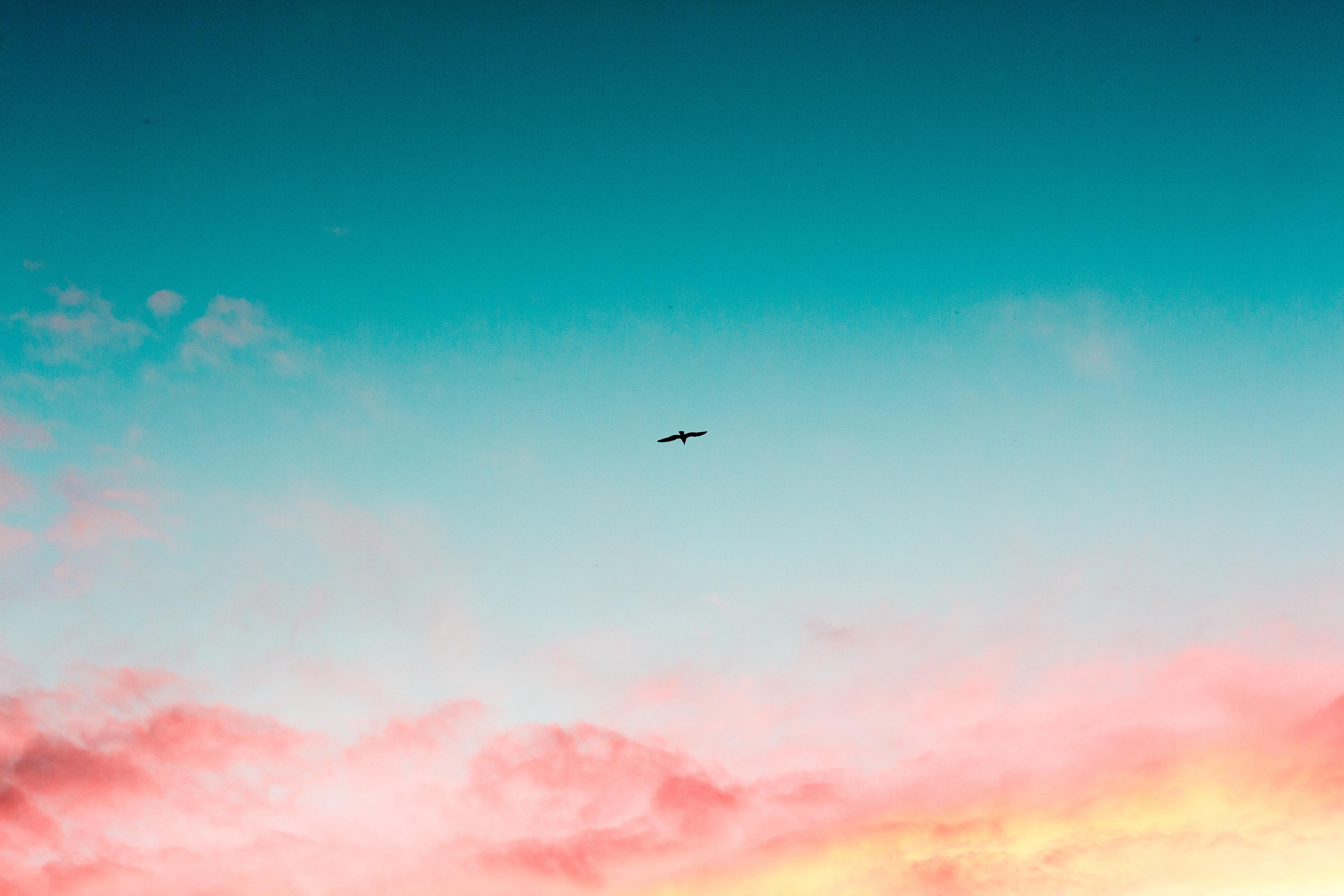 Wallpapers Hd Flying Birds Apple Animals Blue Sky Desktop: 1920x1080 Beautiful Sky Clouds Bird Flying 4k Laptop Full
