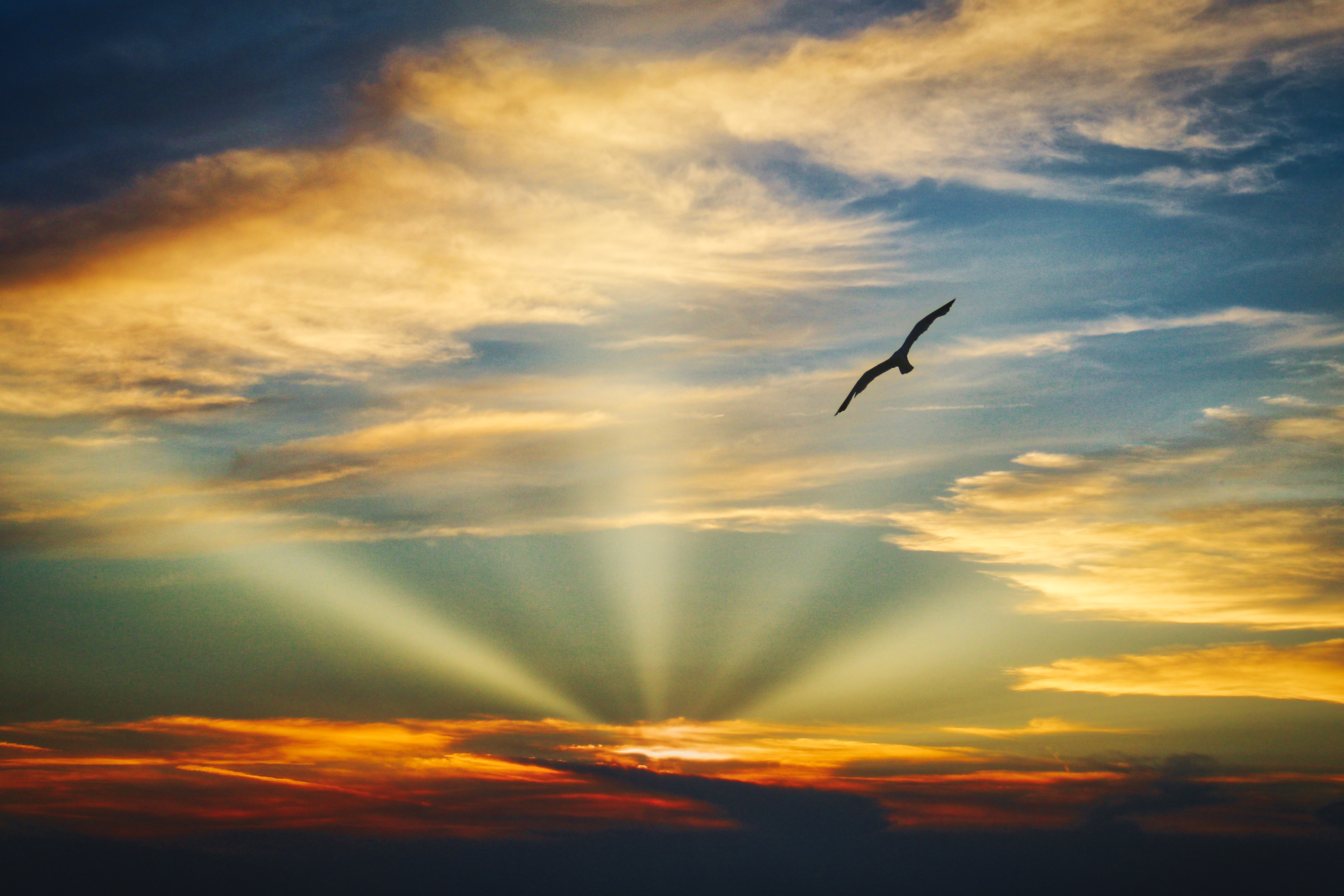 Wallpaper Clouds Blue Sky Hd 5k Nature 3492: Bird Flying Sunset Evening View Clouds Beautiful Sky 5k
