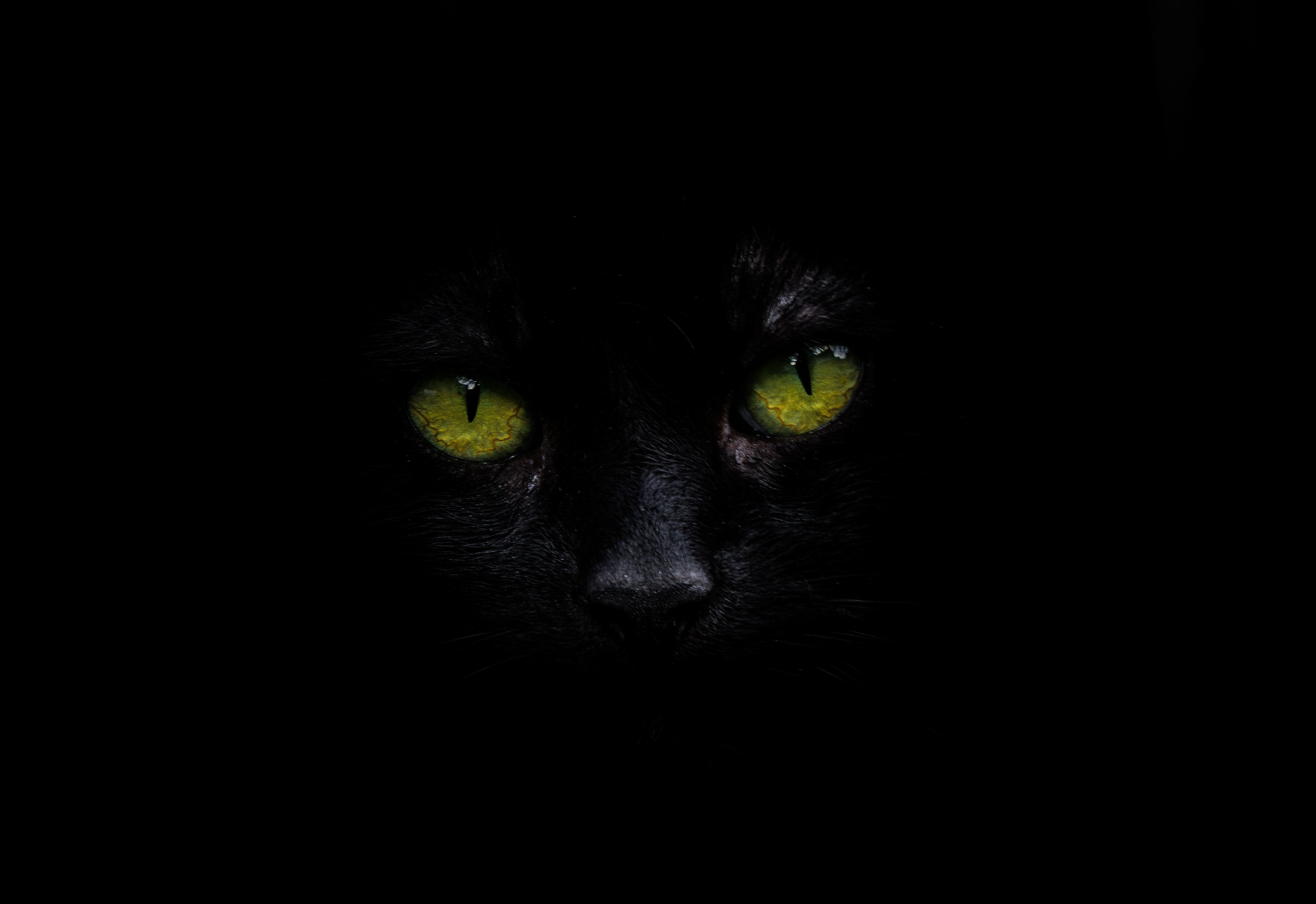 Cat Oled 5k Hd Animals 4k Wallpapers Images
