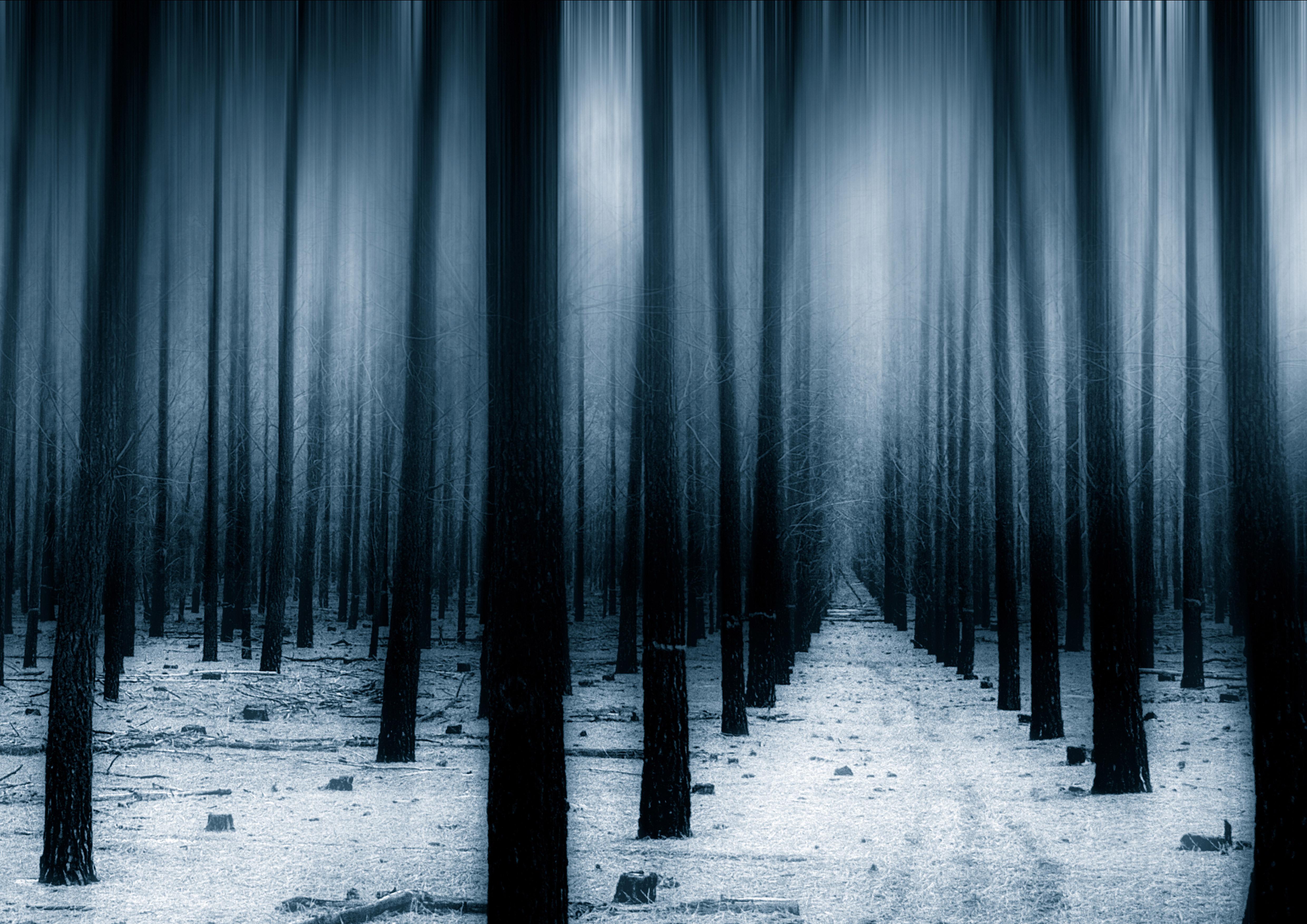 Dark Forest Woods Snow Winter 8k, HD Nature, 4k Wallpapers ...