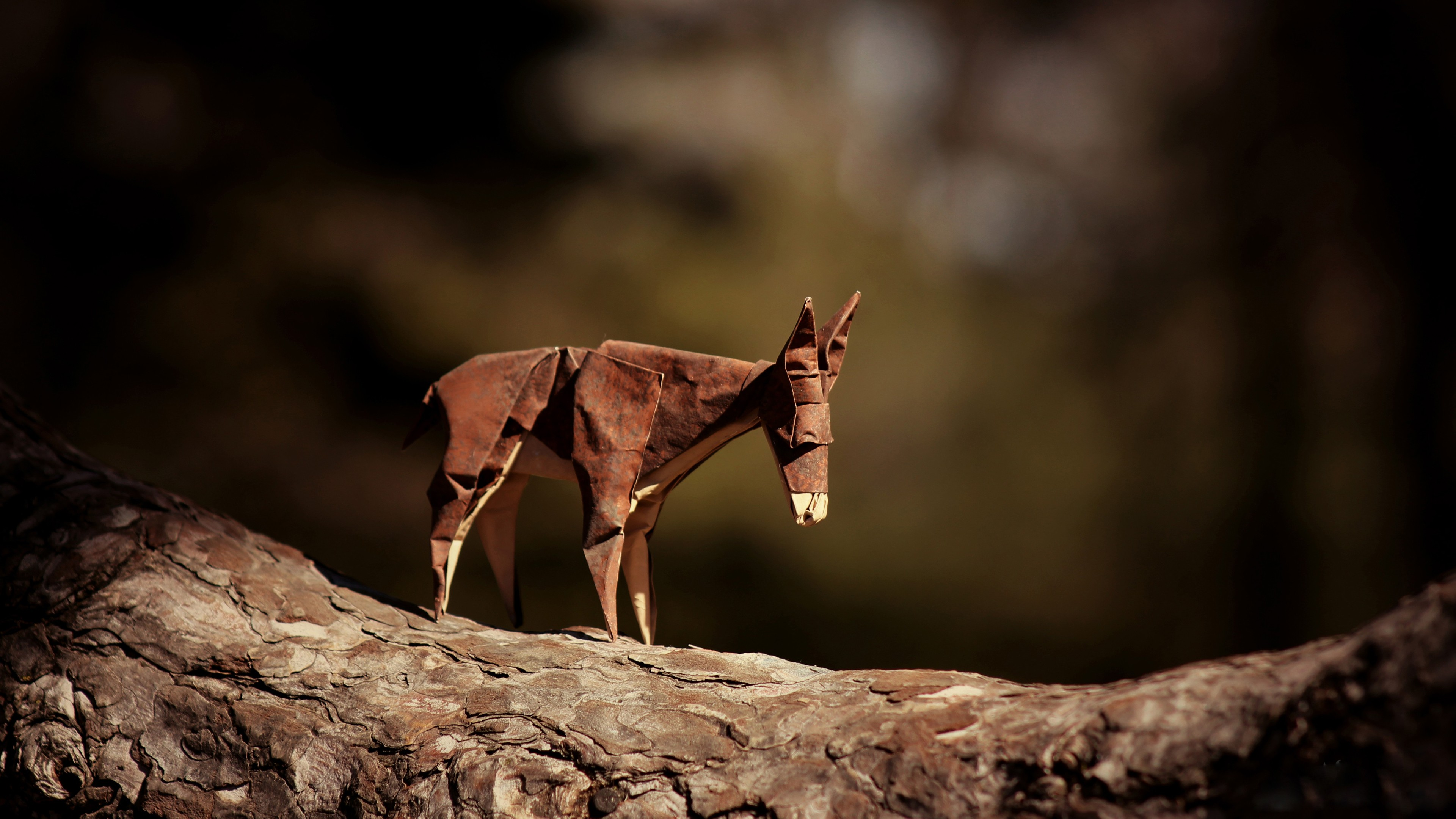 Donkey Origami, HD Creative, 4k Wallpapers, Images ... - photo#34