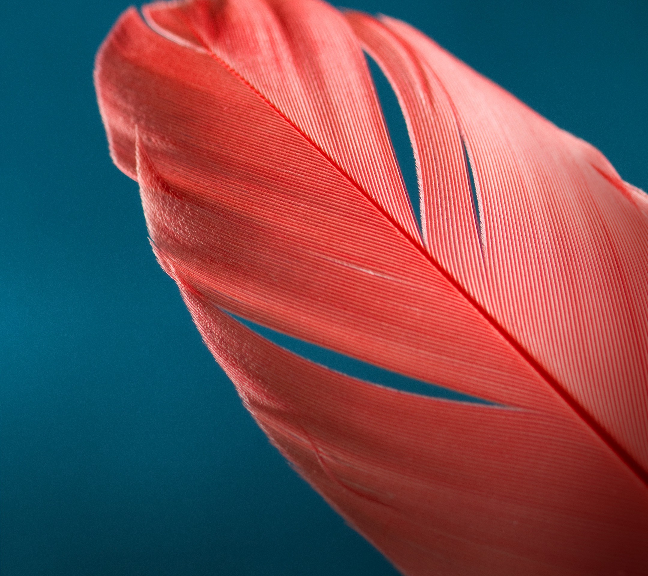 Feathers Macro, HD Photography, 4k Wallpapers, Images