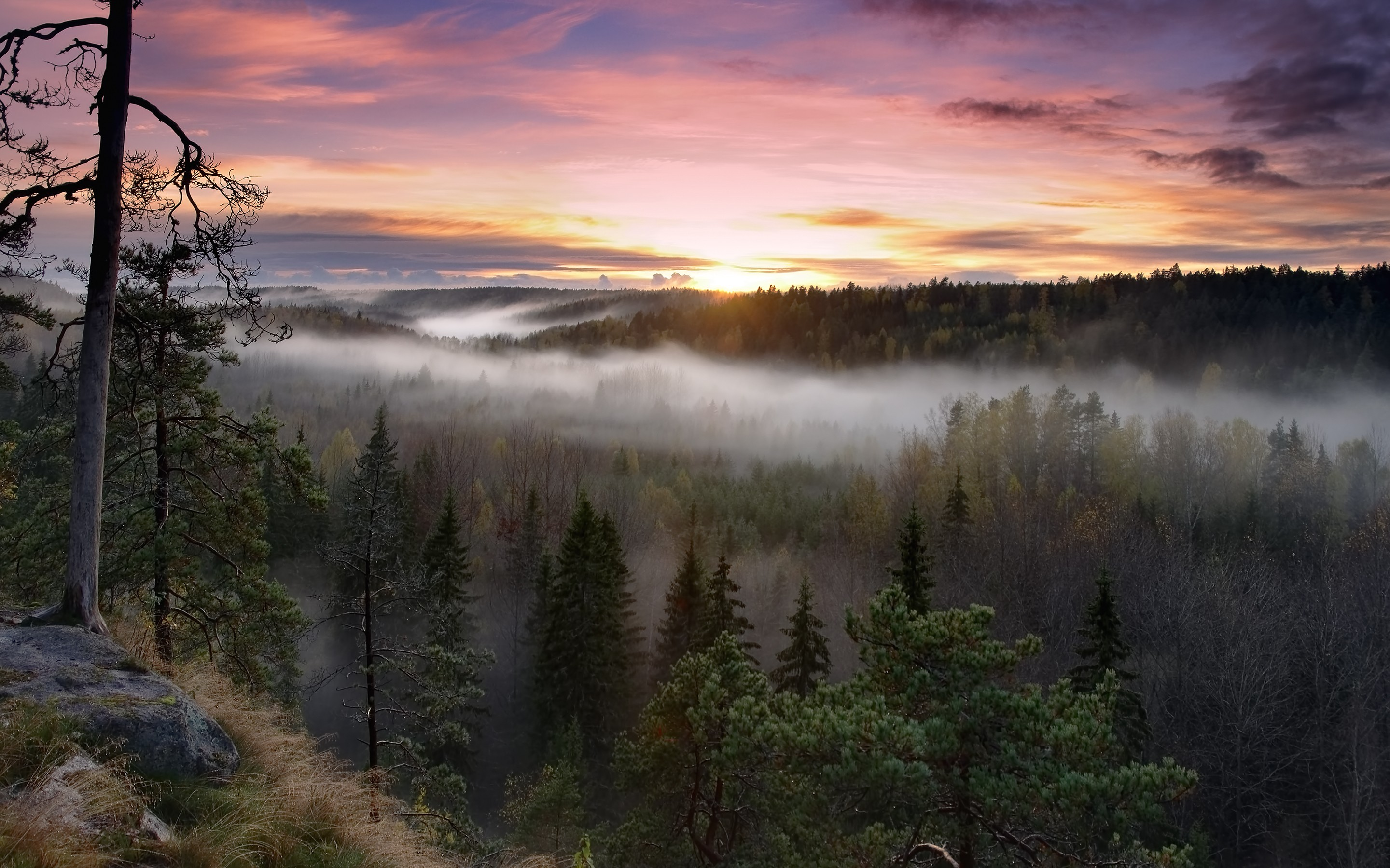 Foggy Sunrise National Park, HD Nature, 4k Wallpapers ...
