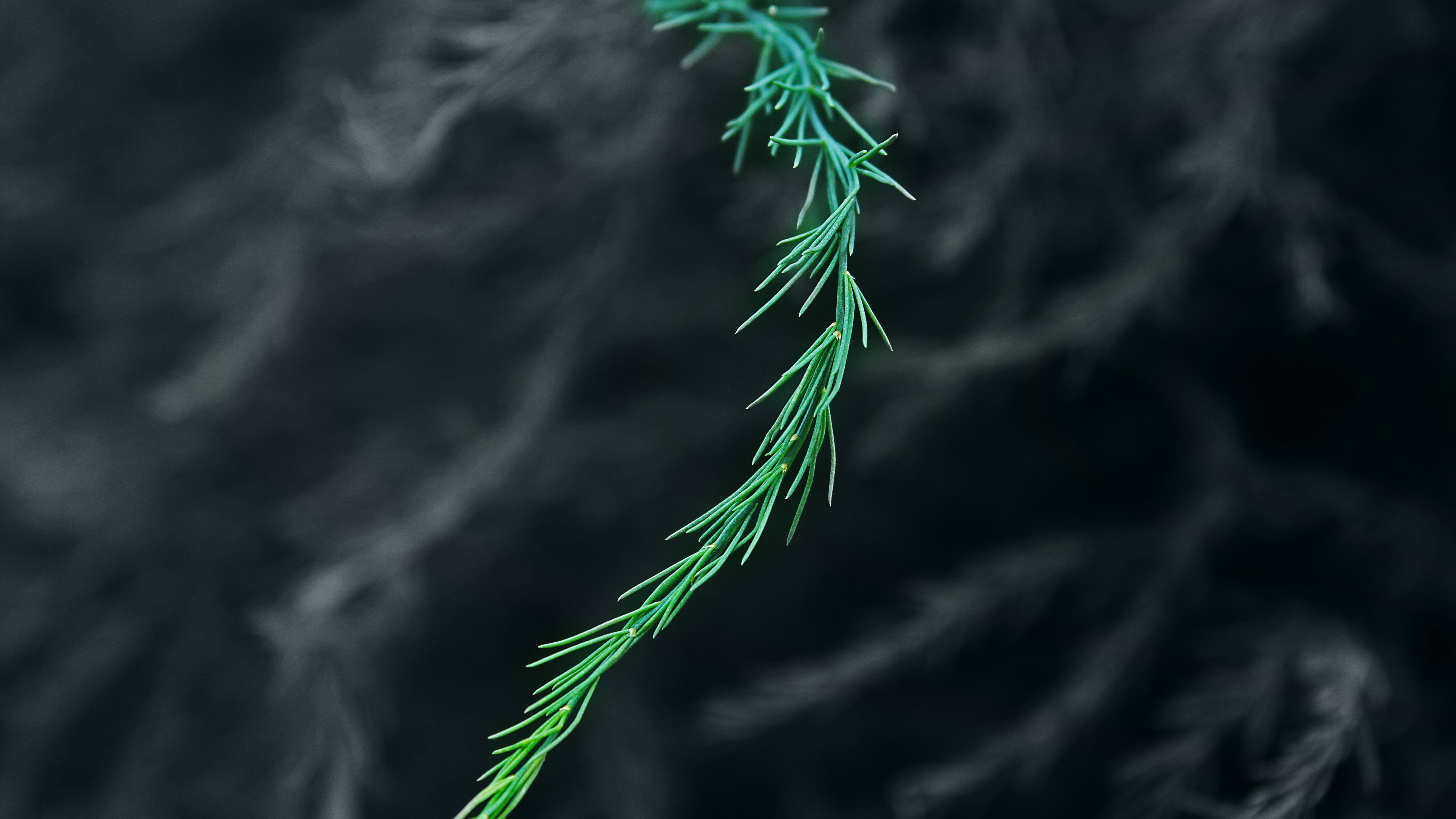 Green Bush Blur 5k, HD Nature, 4k Wallpapers, Images