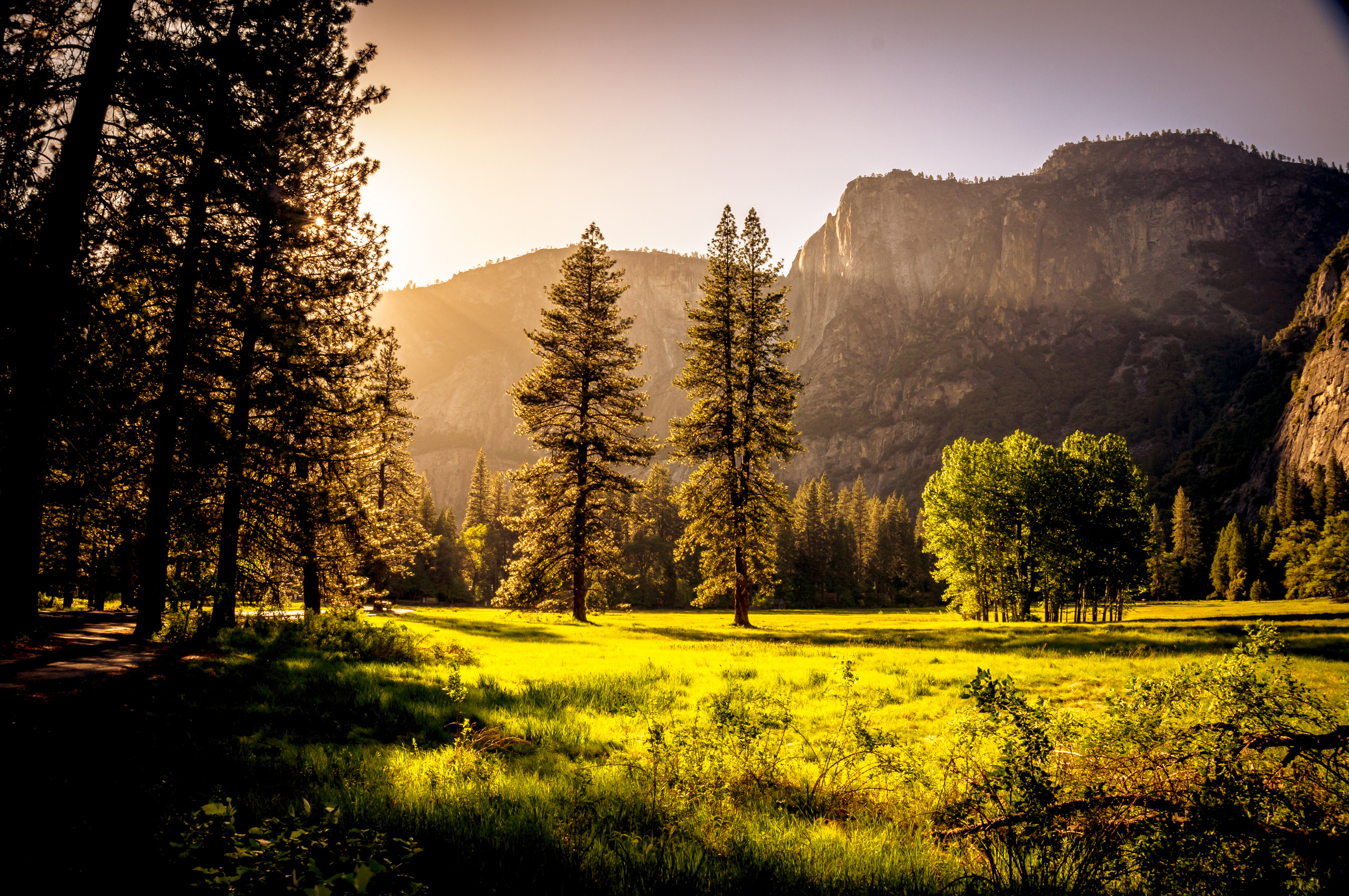 Green grass field trees hd nature 4k wallpapers images - Wallpapers 1280x800 nature ...