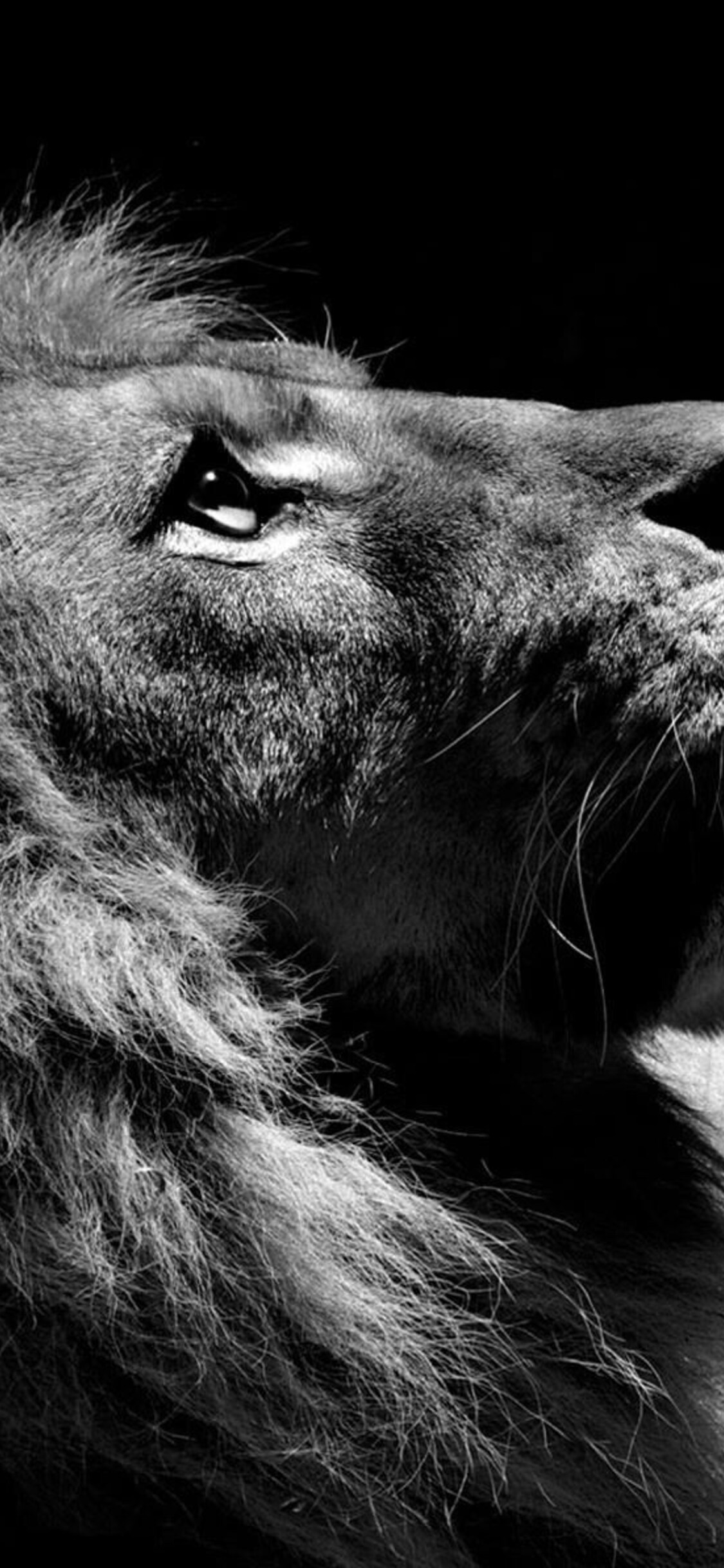 1125x2436 Lion Black And White Iphone XS,Iphone 10,Iphone ...