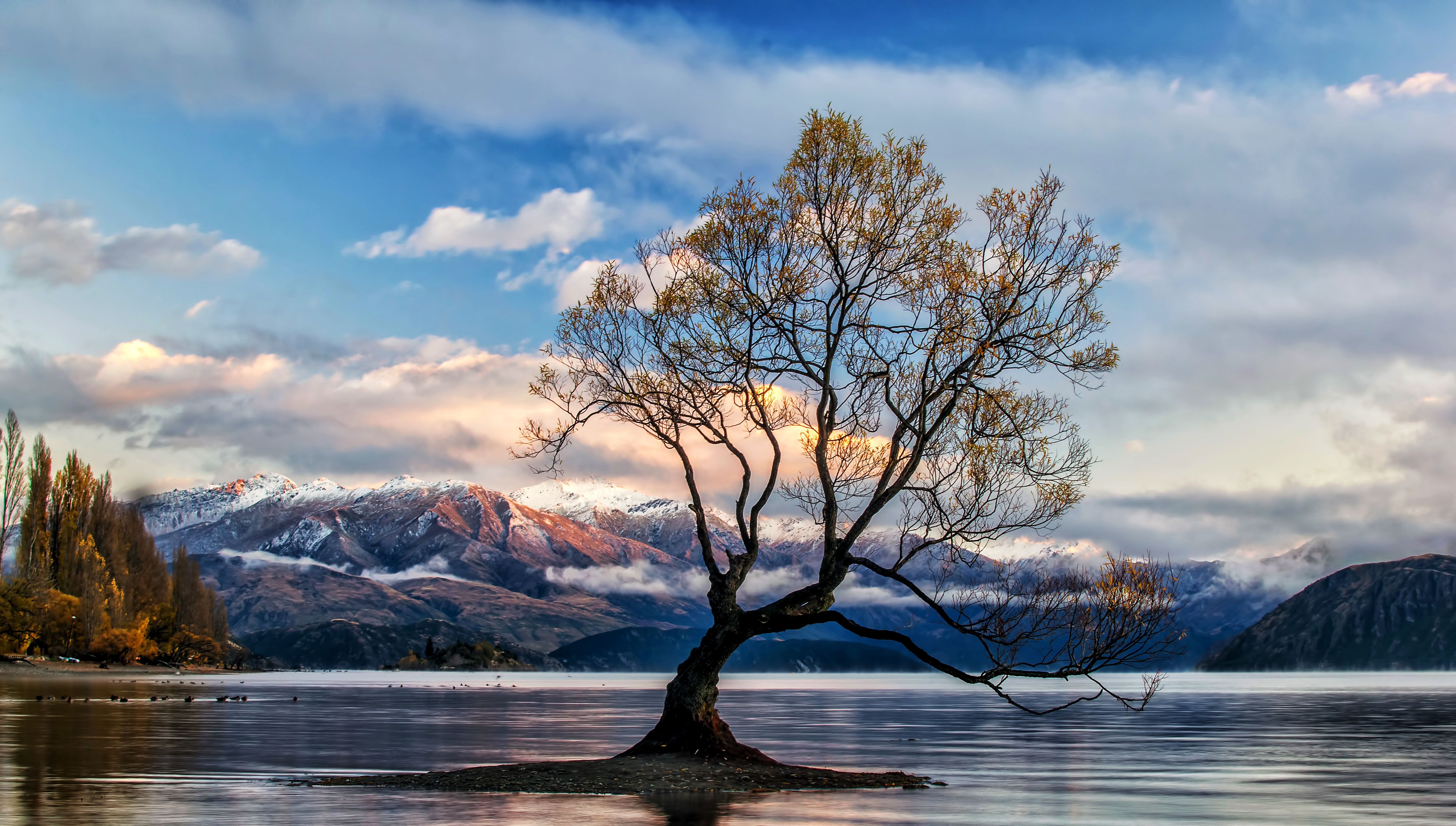 5120X2880 Lone Tree Lake Wanaka 5K Hd 4K Wallpapers, Images, Backgrounds, Photos And -2841