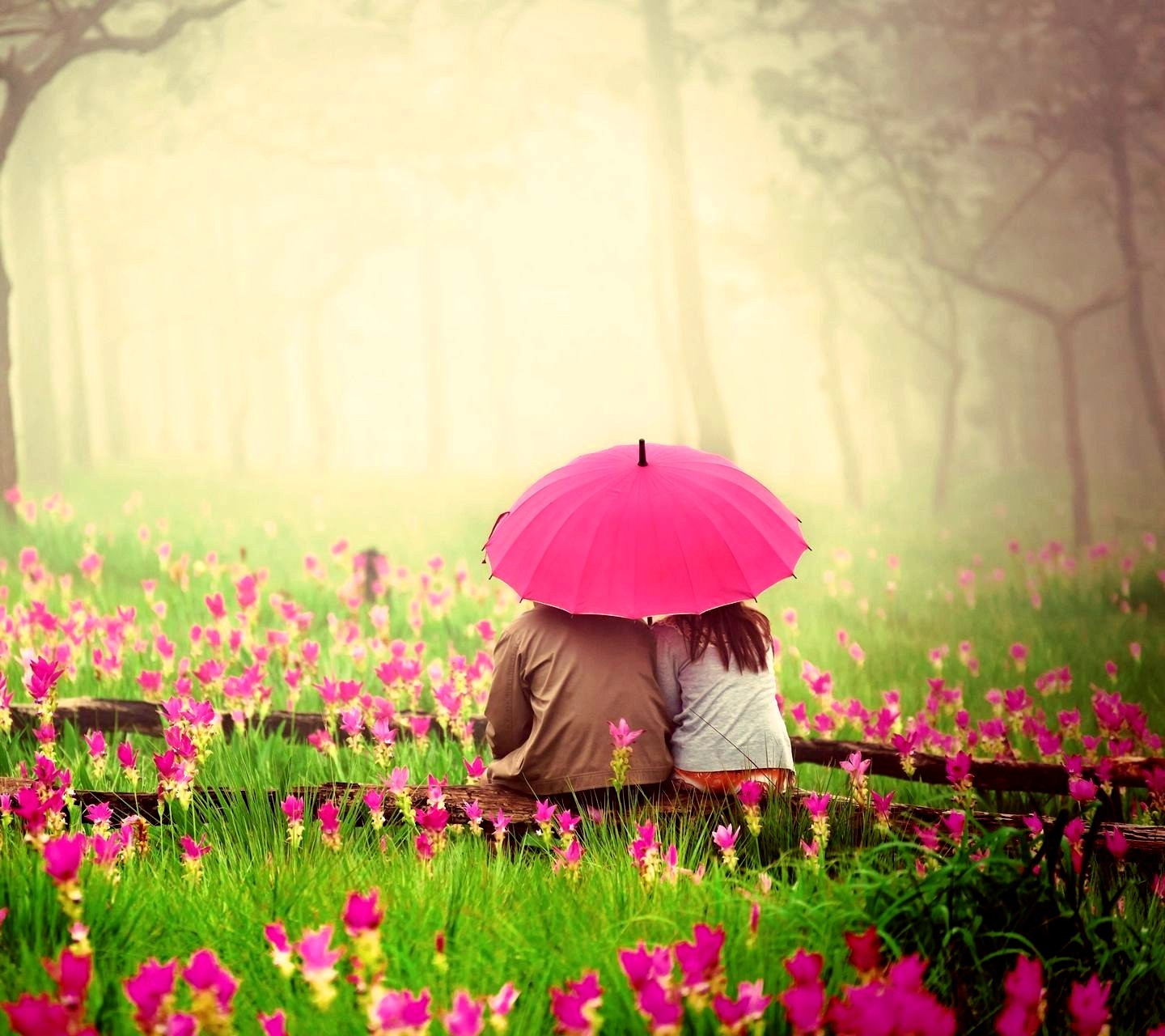 Love Couple In Pink Garden, HD Love, 4k Wallpapers, Images