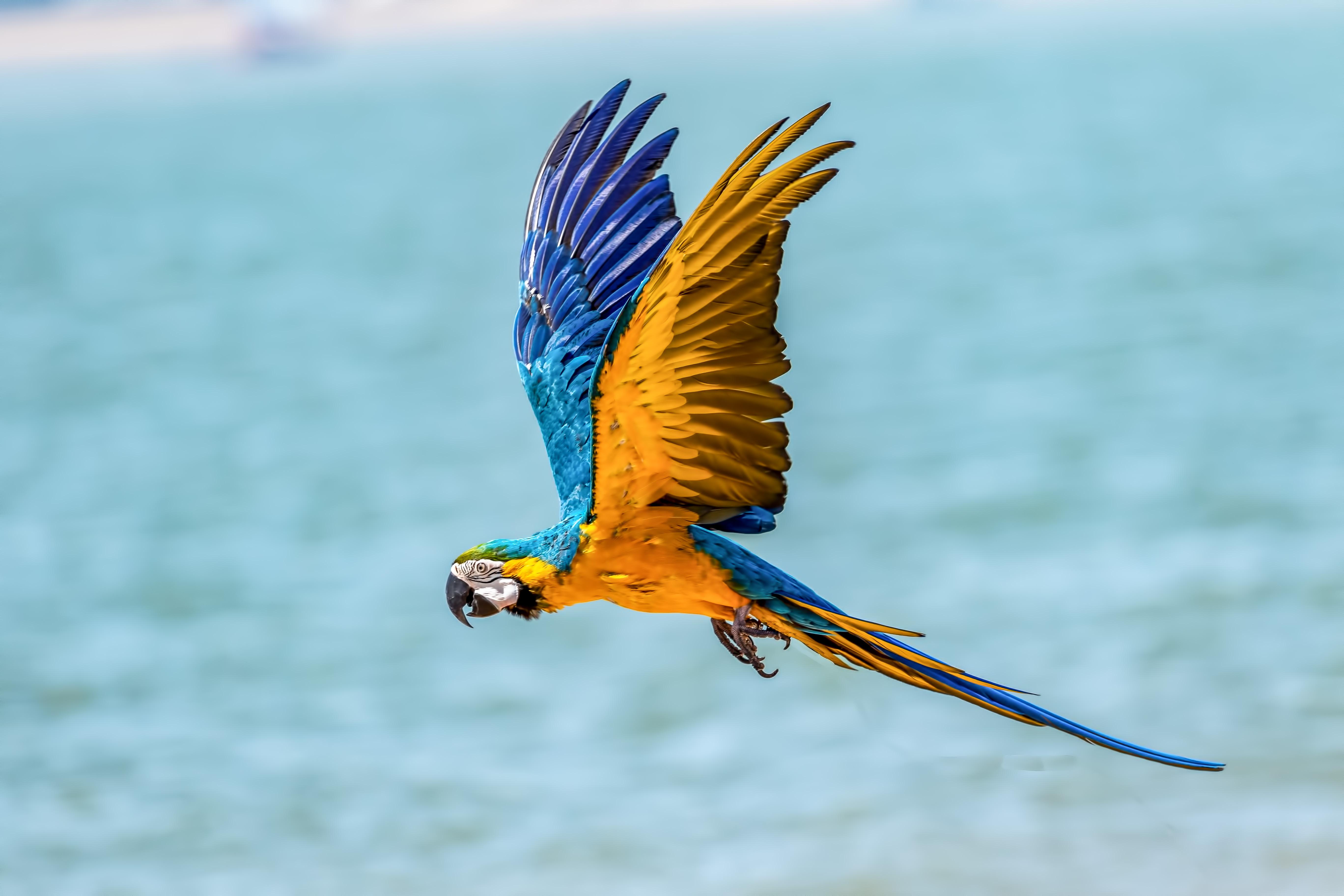 Macaw Bird 5k, HD Birds, 4k Wallpapers, Images