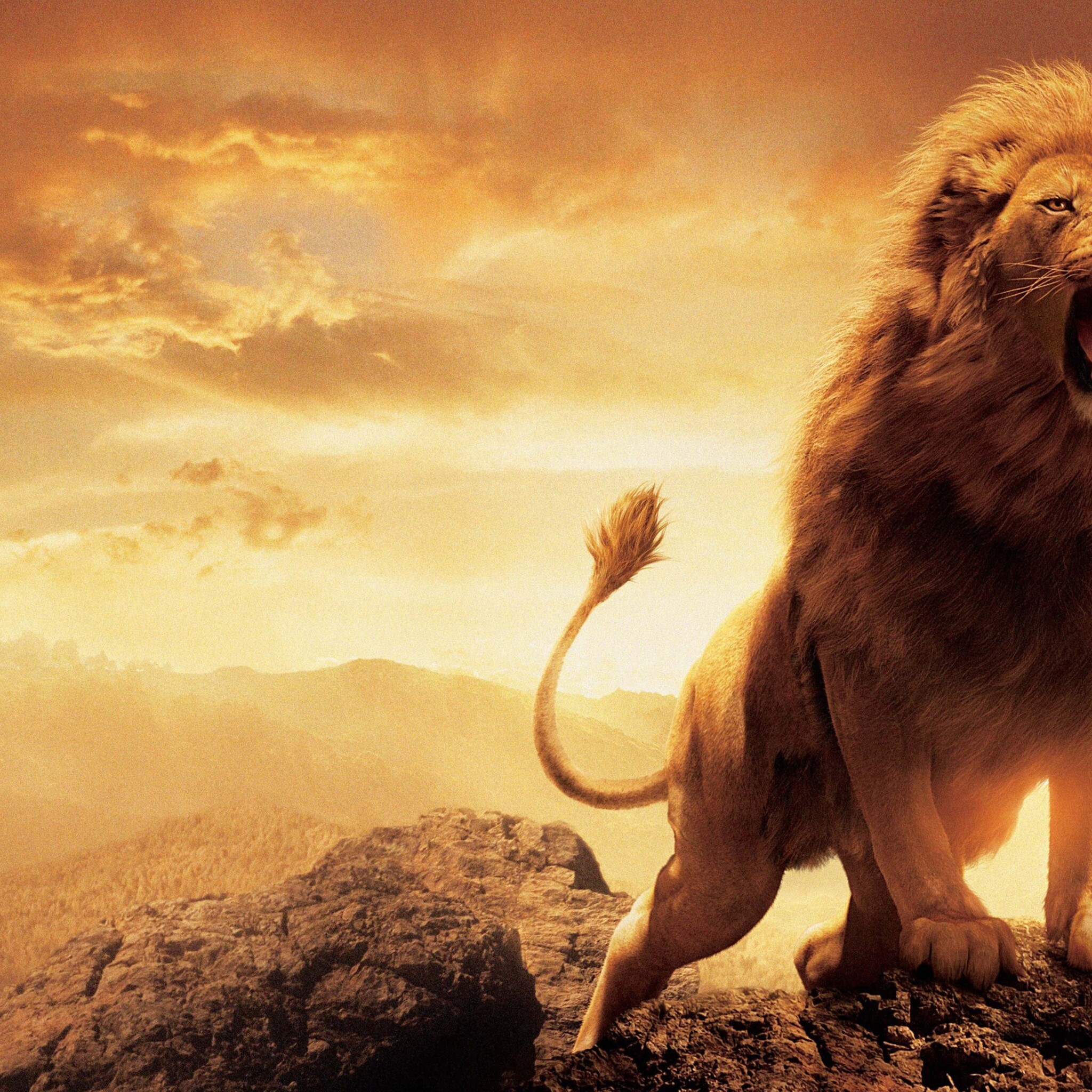 Hd 1600x900 Wallpaper: 2048x2048 Narnia Lion Ipad Air HD 4k Wallpapers, Images