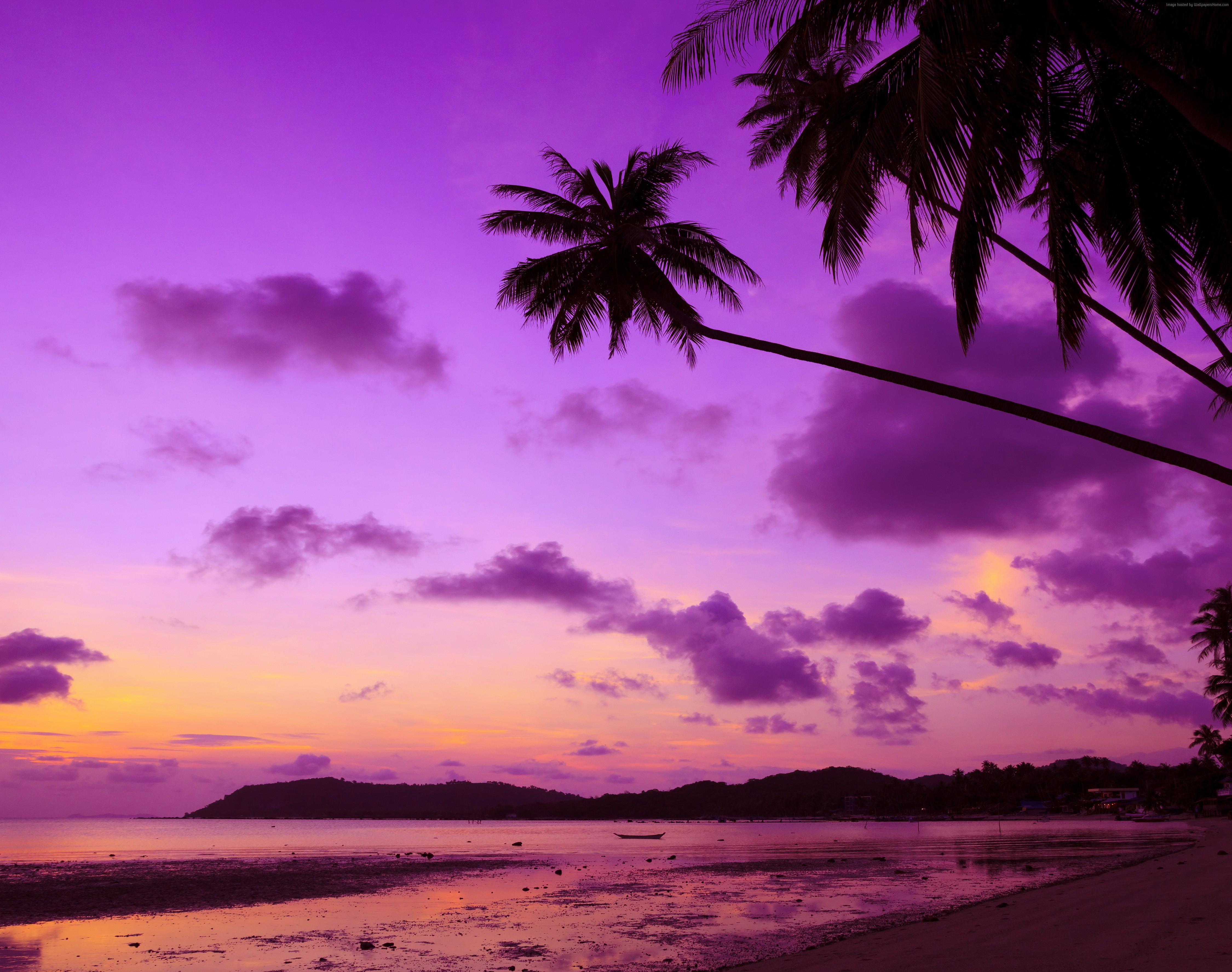 2048x2048 Anthem Ipad Air Hd 4k Wallpapers Images: 2048x2048 Purple Palm Tree Ipad Air HD 4k Wallpapers