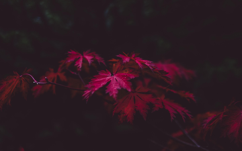 2880x1800 Red Leaves 4k Macbook Pro Retina HD 4k