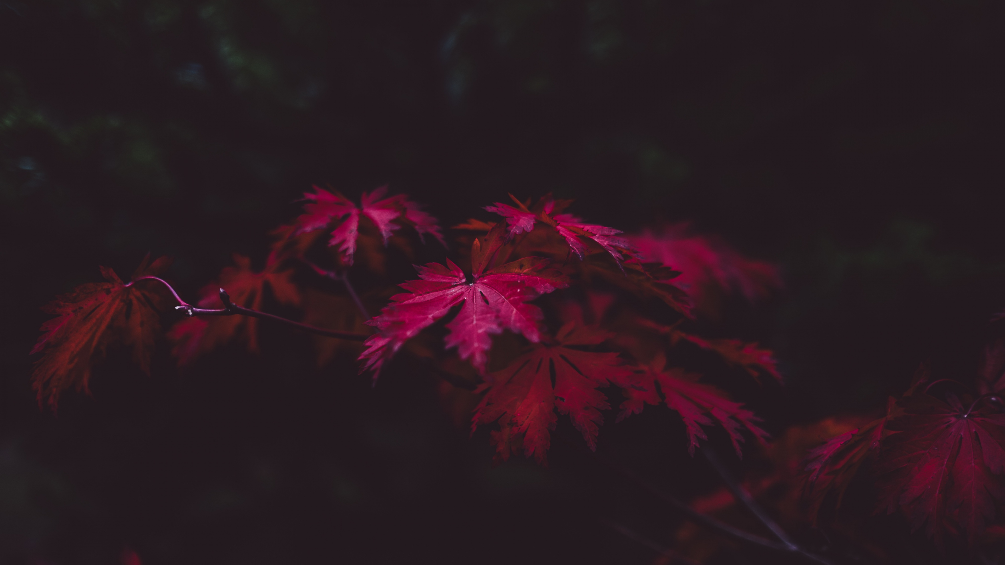 480x800 Red Leaves 4k Galaxy Note,HTC Desire,Nokia Lumia