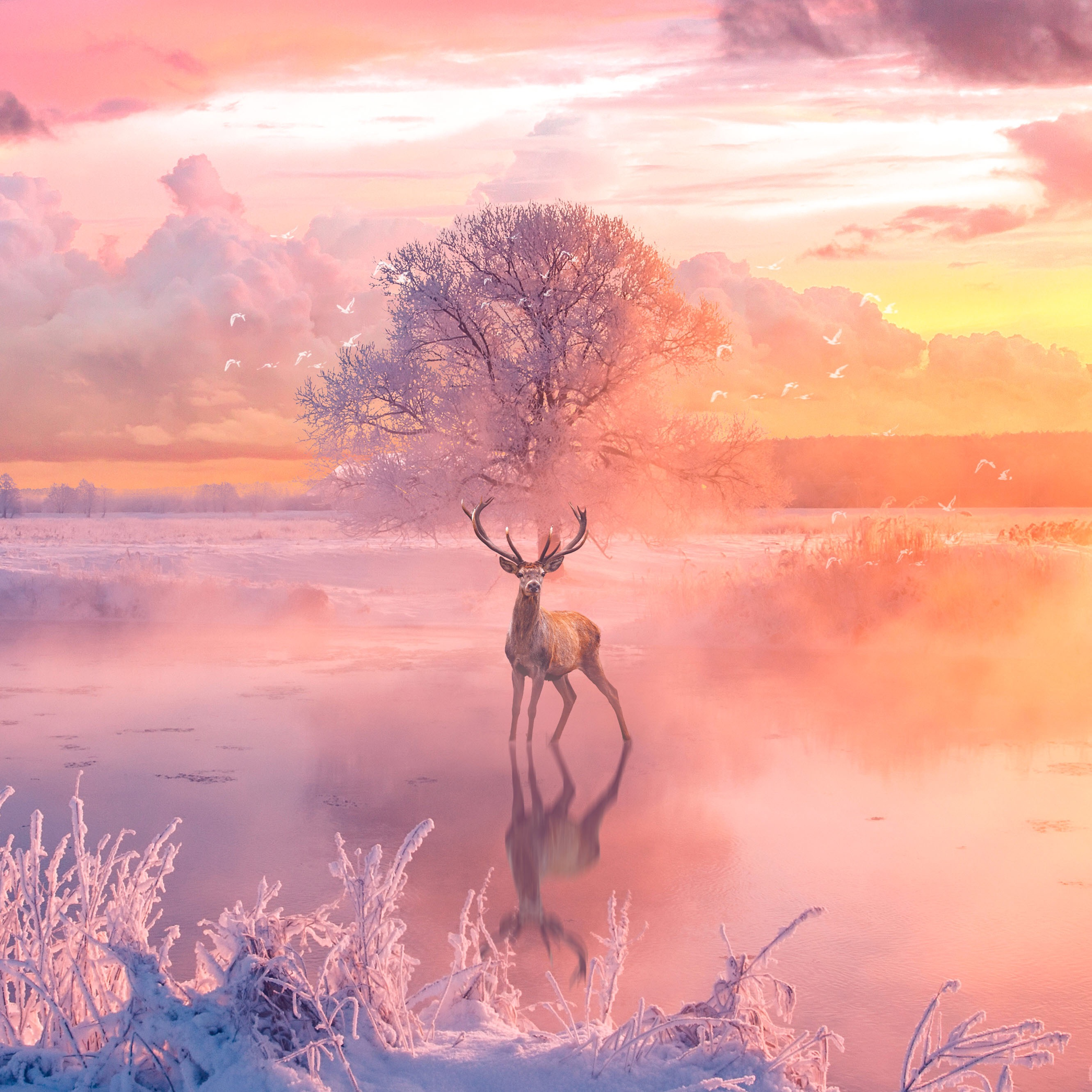 Hd 1600x900 Wallpaper: 1600x900 Reindeer Fantasy Arts 1600x900 Resolution HD 4k