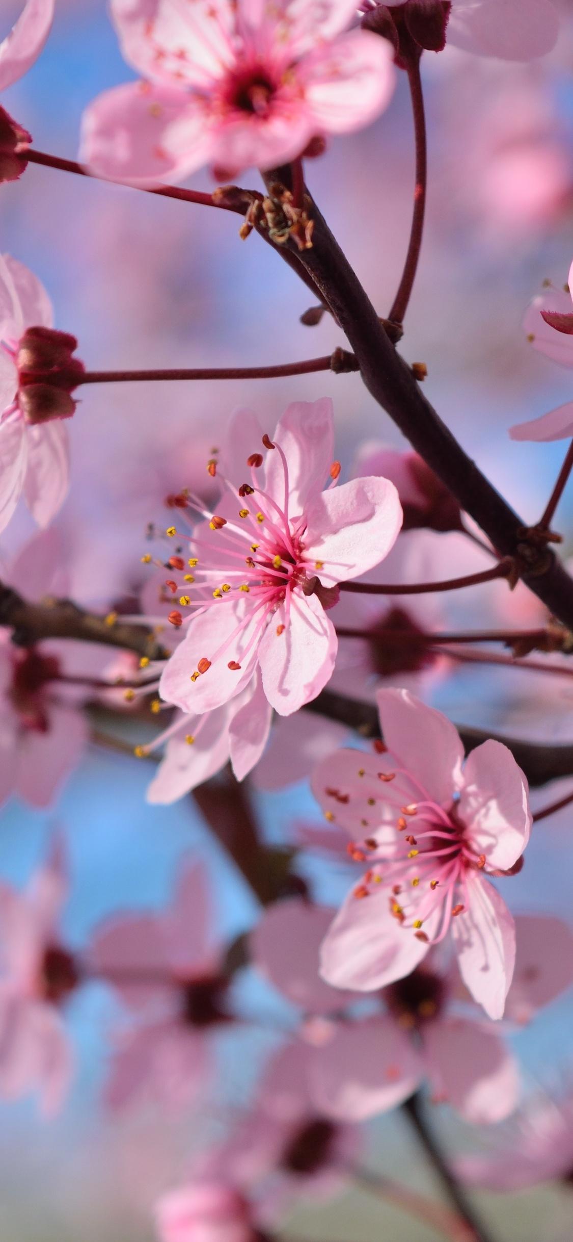 1125x2436 Spring Season Flowers Iphone XS,Iphone 10,Iphone ...