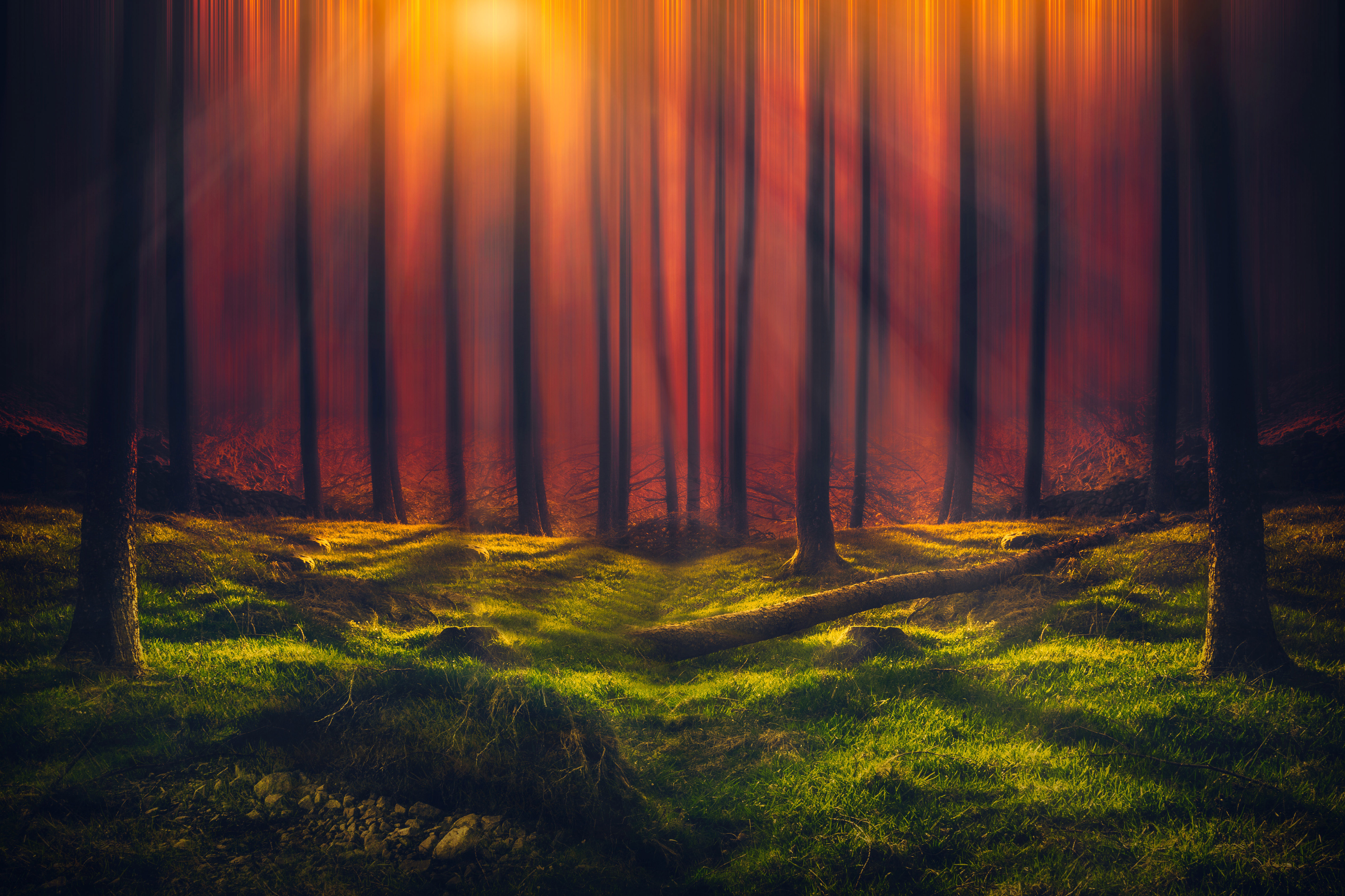Sunbeam Forest 5k, HD Nature, 4k Wallpapers, Images ...