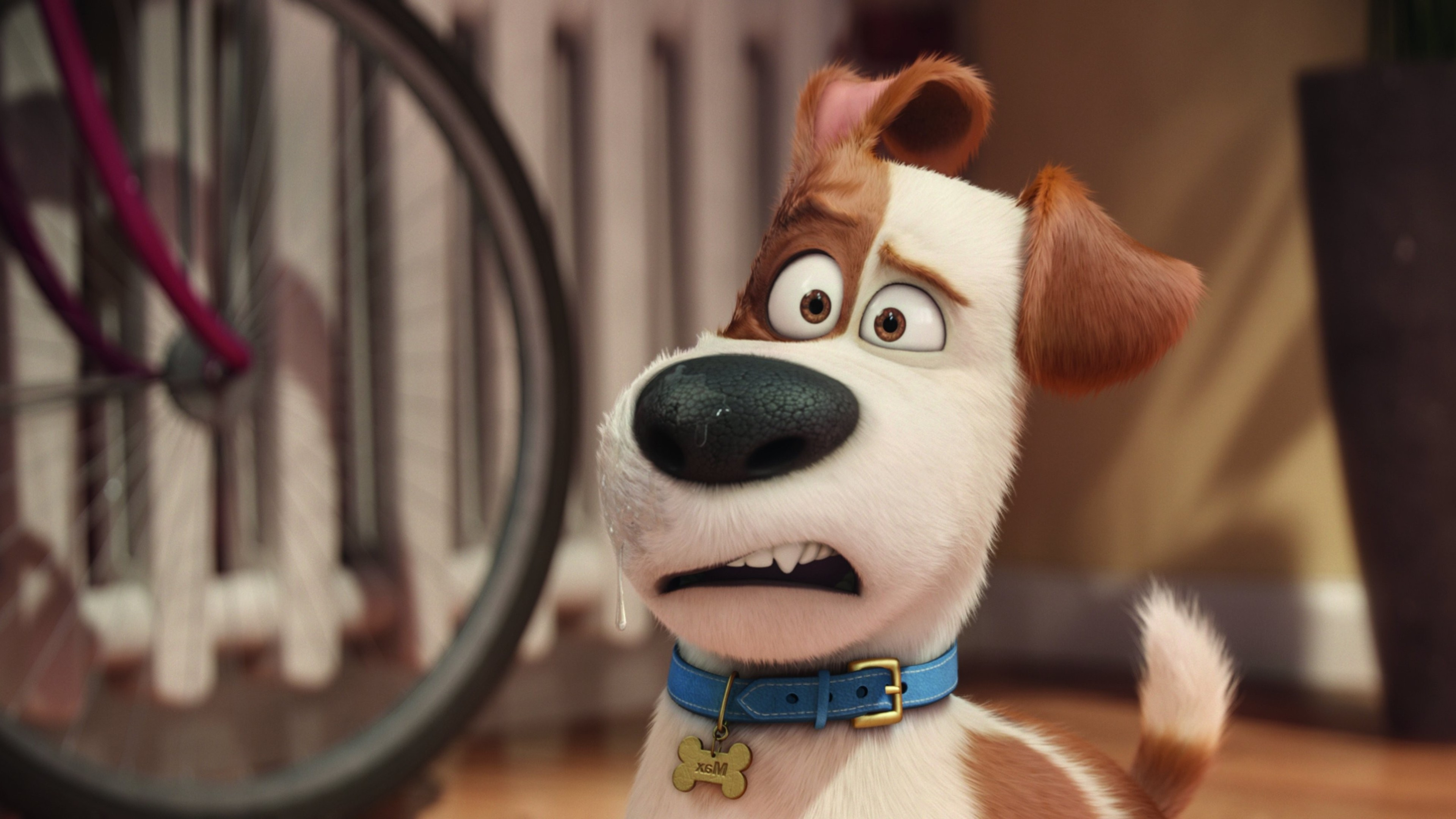 The Secret Life Of Pets 2016 Hindi Download: The Secrete Life Of Pets Movie HD, HD Movies, 4k