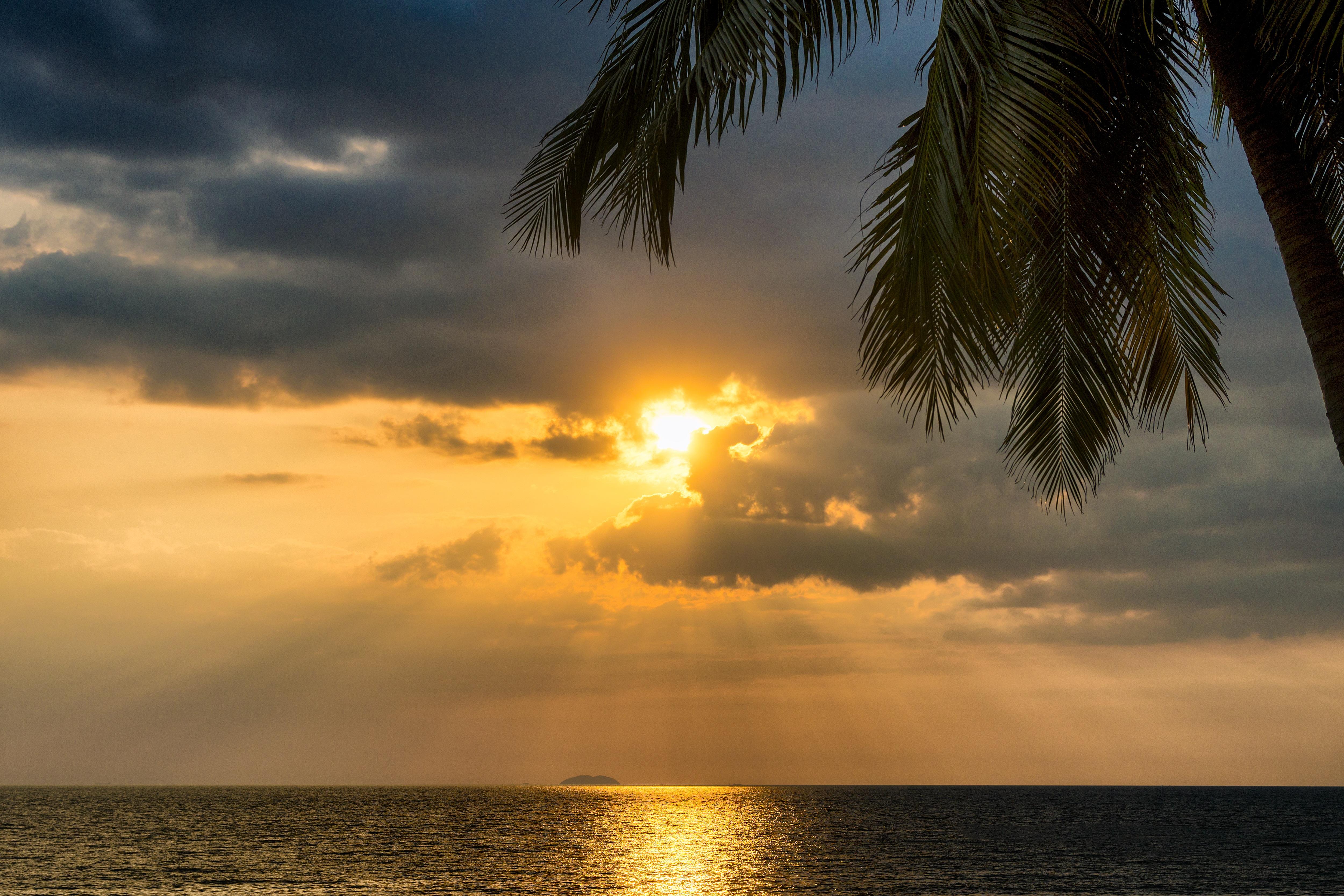 Tropics Palm Trees Sun Beach 4k Hd Desktop Wallpaper For: 1920x1080 Tropical Palm Tree Beside Sunset Ocean 5k Laptop