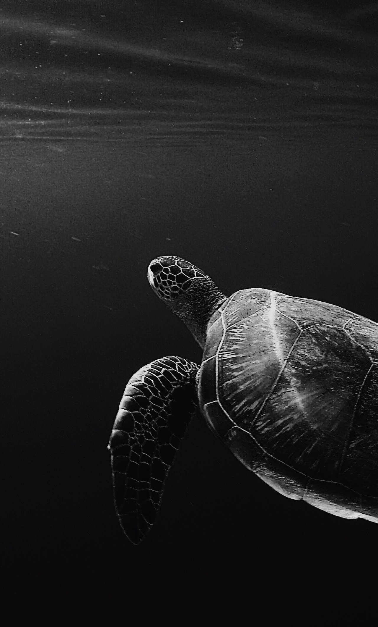 1280x2120 Turtle Oled 4k iPhone 6+ HD 4k Wallpapers ...