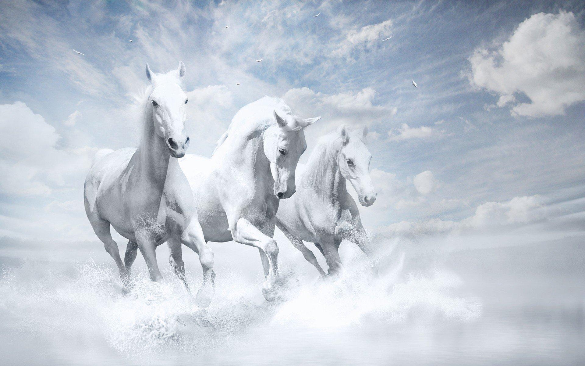 1920x1080 white horses hd laptop full hd 1080p hd 4k