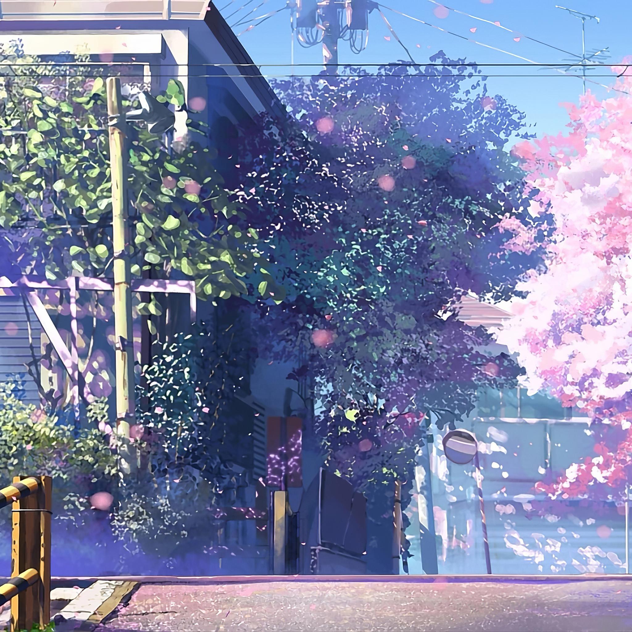 2048x2048 5 Centimeters Per Second Anime Tv Series 4k Ipad Air Hd