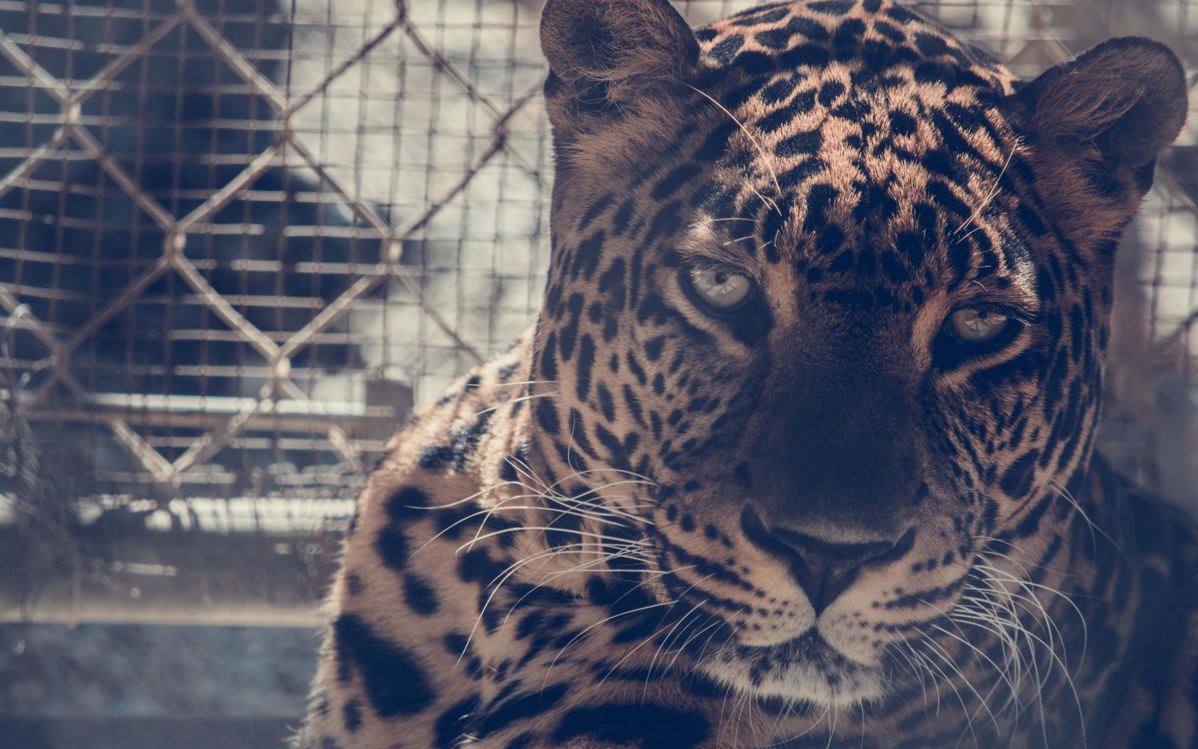 5k-leopard-fk.jpg