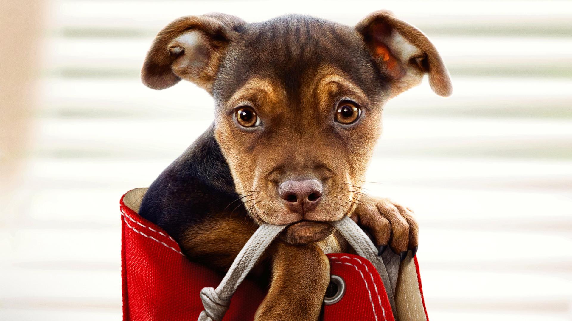 a-dogs-way-home-movie-2019-48.jpg