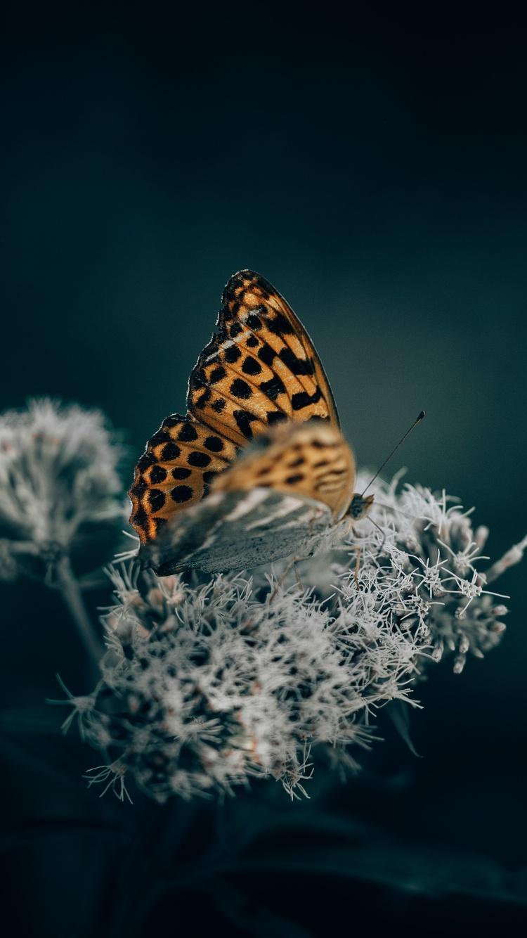 a-orange-butterfly-on-top-of-an-flower-5k-z9.jpg