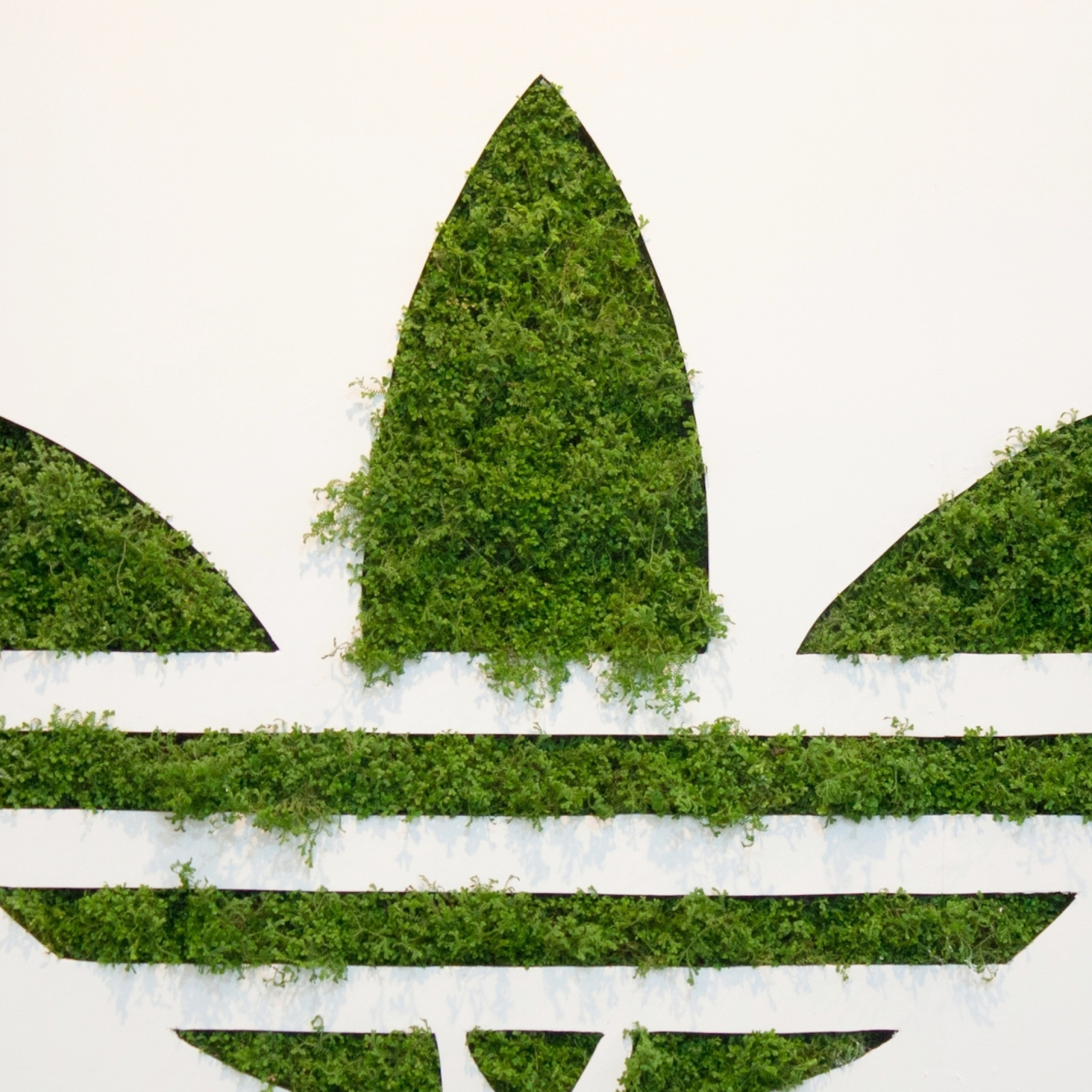 adidas-grass-logo.jpg