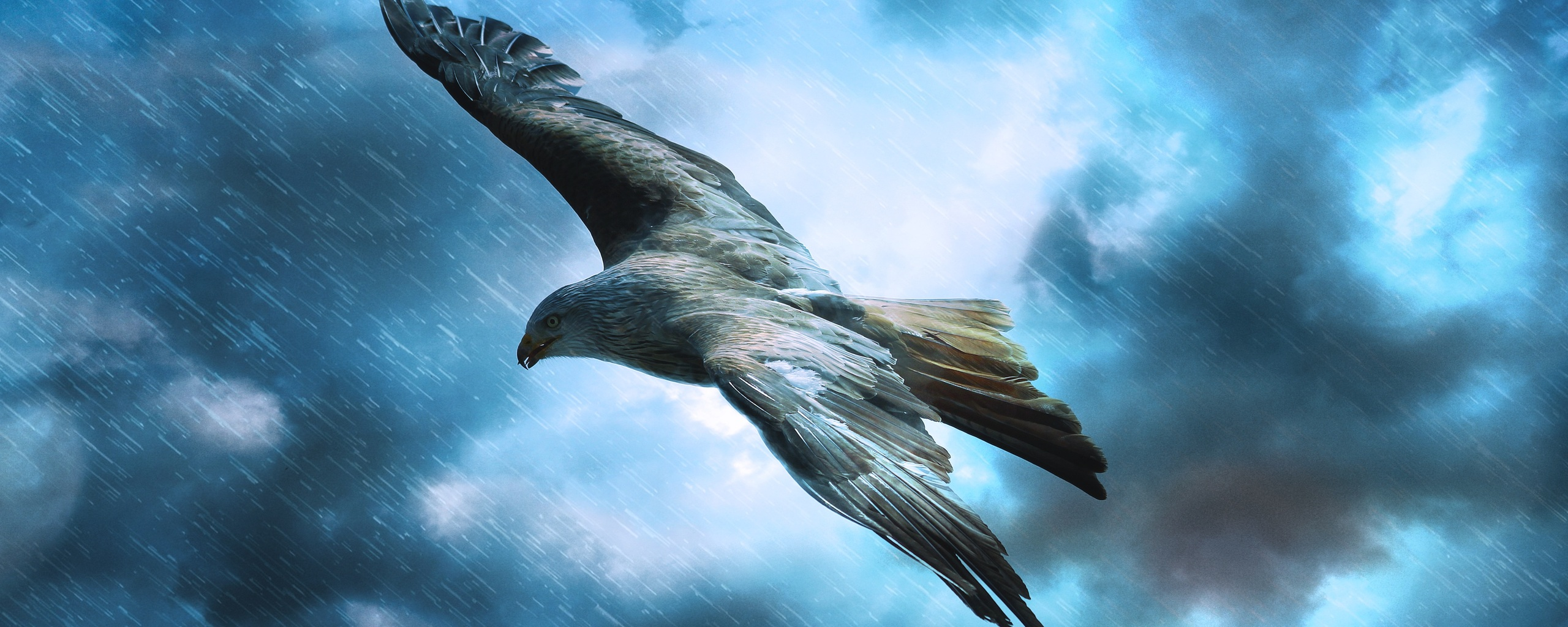 adler-raptor-eagle-5k-3z.jpg