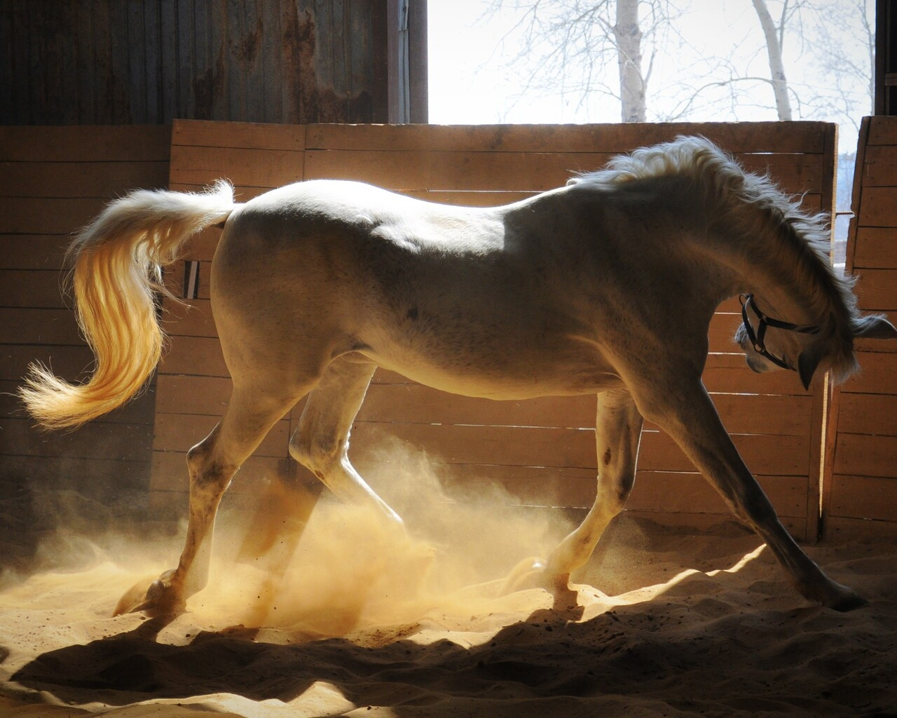1280x1024 Adorable White Horse 1280x1024 Resolution Hd 4k Wallpapers Images Backgrounds Photos And Pictures