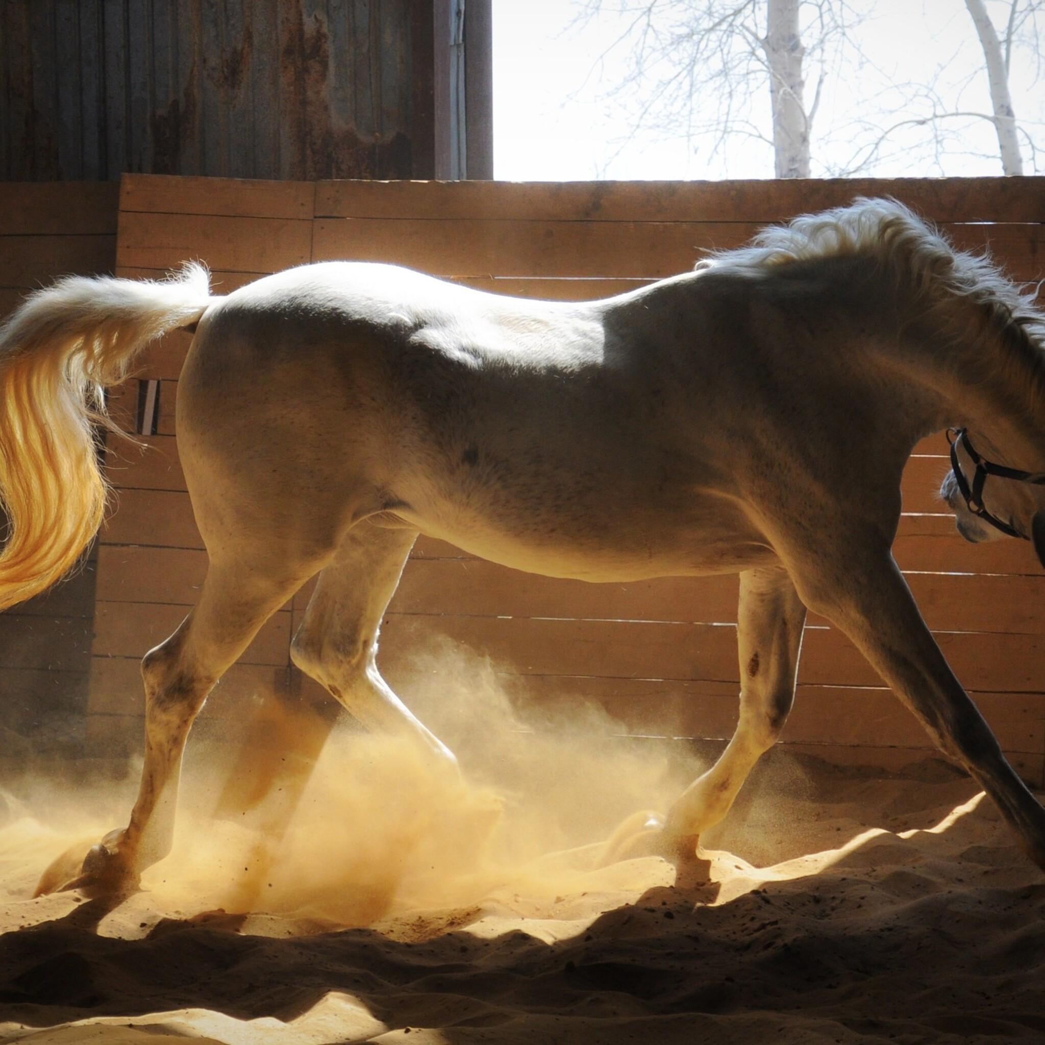 adorable-white-horse.jpg