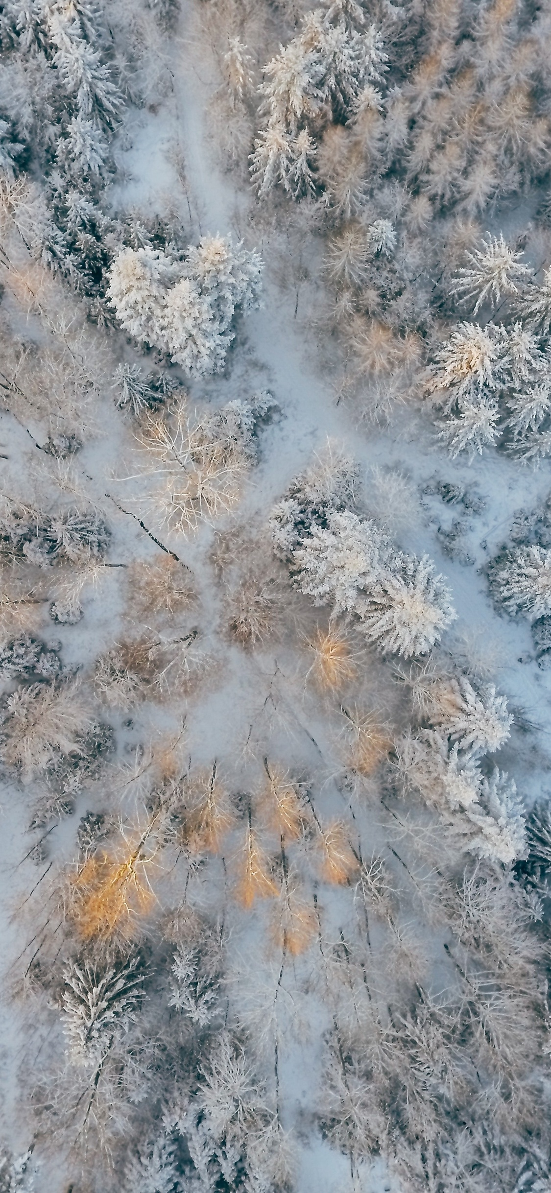 1125x2436 Aerial Short Of Cold Forest Snow Trees 4k Iphone Xs Iphone 10 Iphone X Hd 4k Wallpapers Images Backgrounds Photos And Pictures