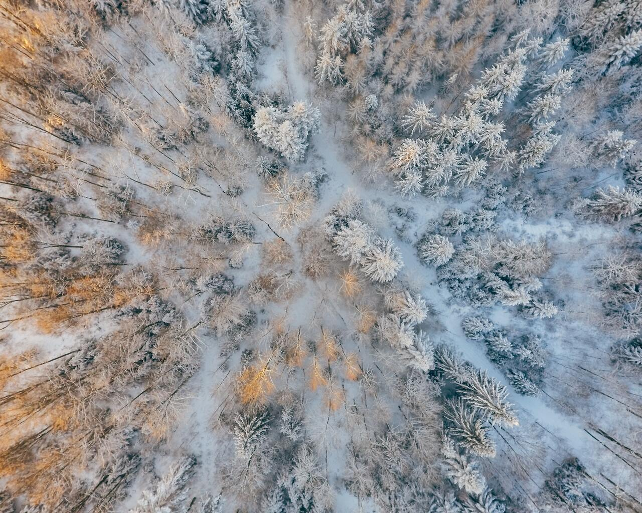 aerial-short-of-cold-forest-snow-trees-4k-7g.jpg