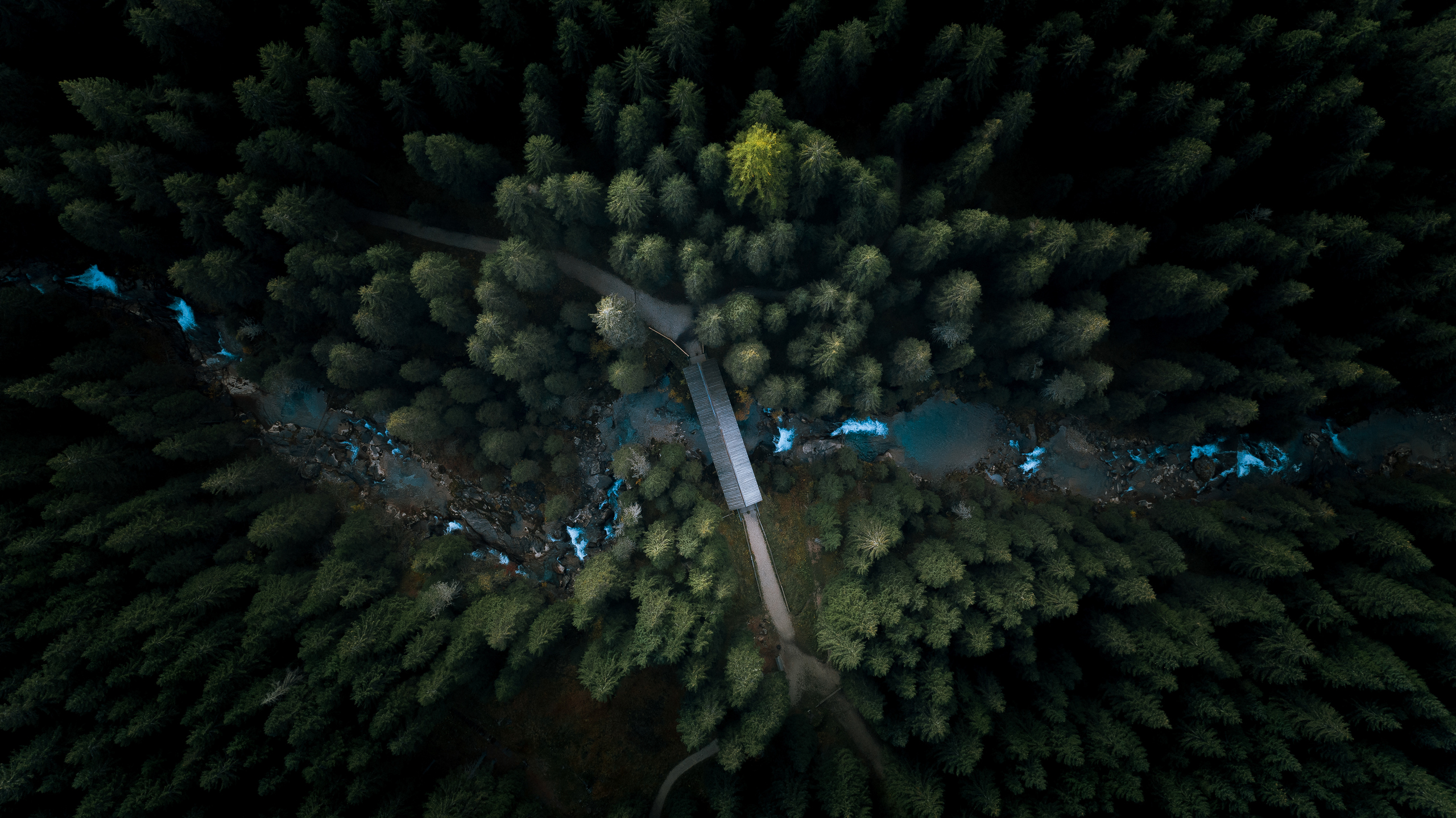 aerial-view-forest-4k-yr.jpg