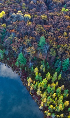aerial-view-from-top-trees-4k-1i.jpg