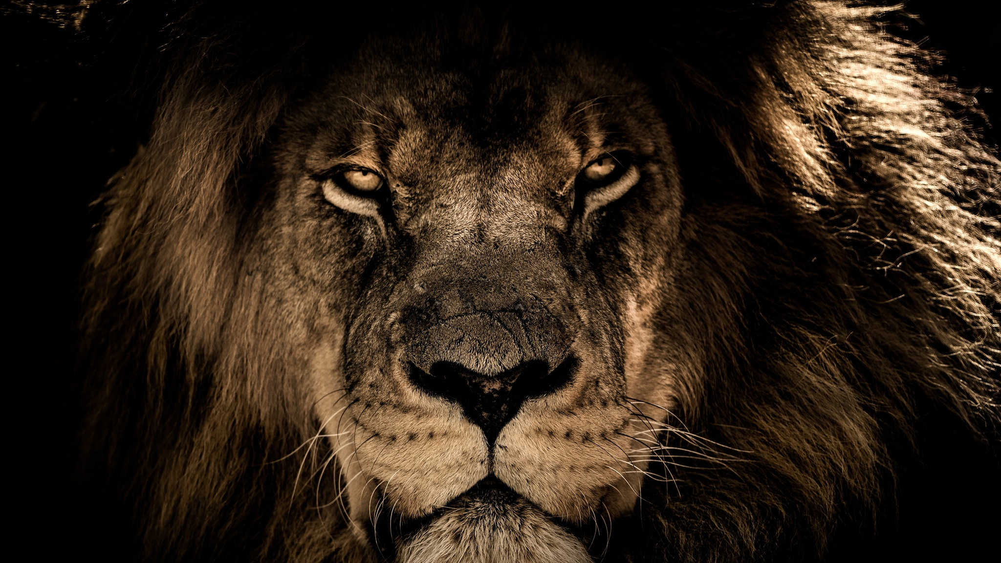 Most Inspiring Wallpaper Logo Lion - african-lion-face-closeup-5k-ap-2048x1152  Perfect Image Reference_366112.jpg