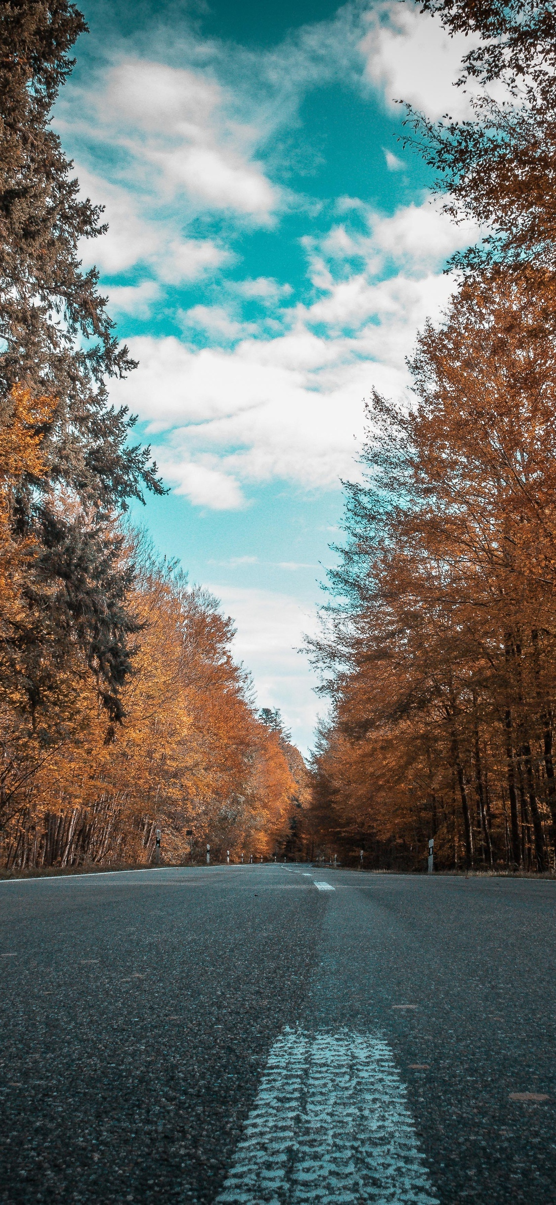 1125x2436 Alone Road Forest Autumn Golden Trees Ultra 4k Iphone Xs
