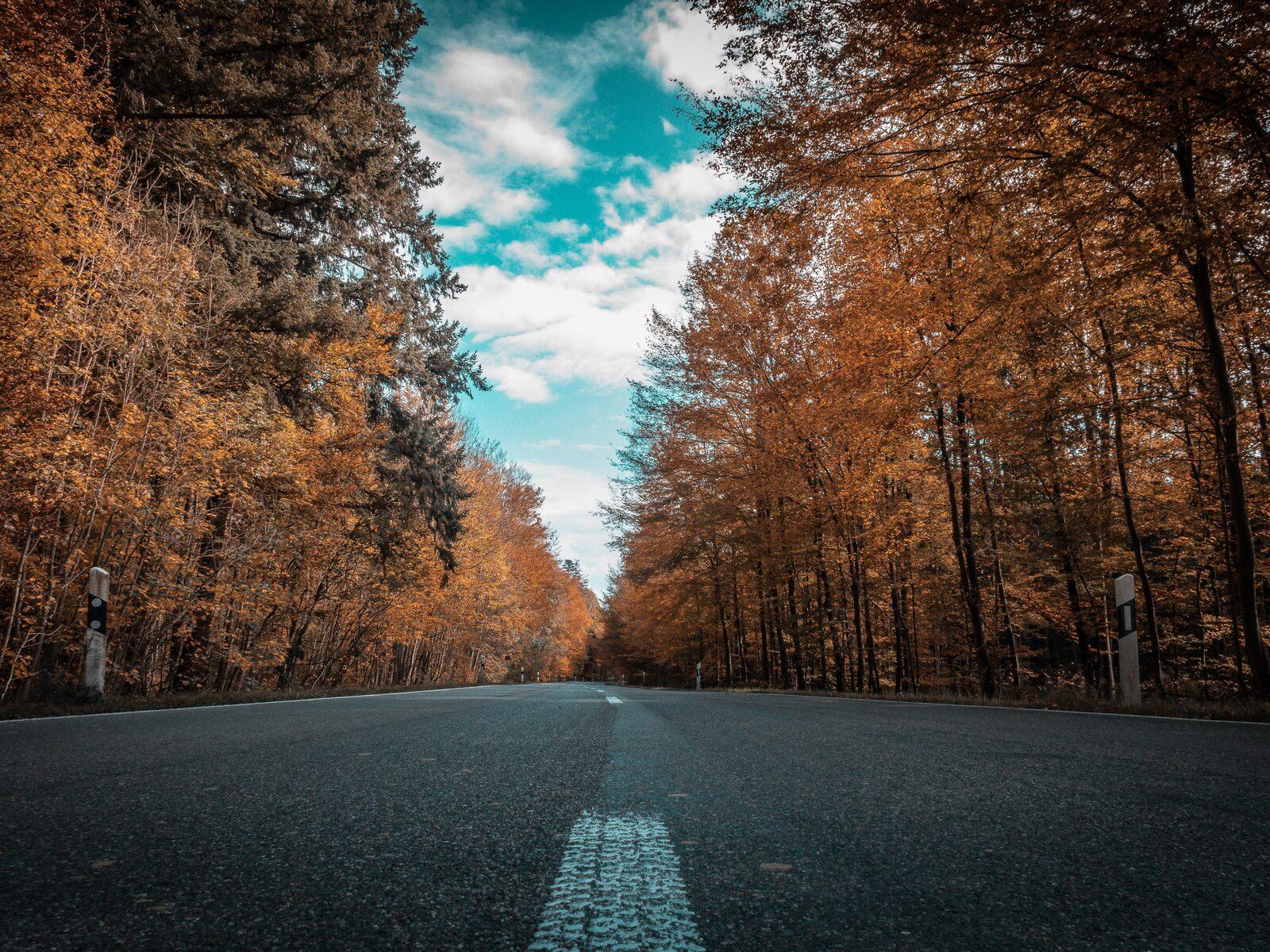 alone-road-forest-autumn-golden-trees-ultra-4k-n1.jpg