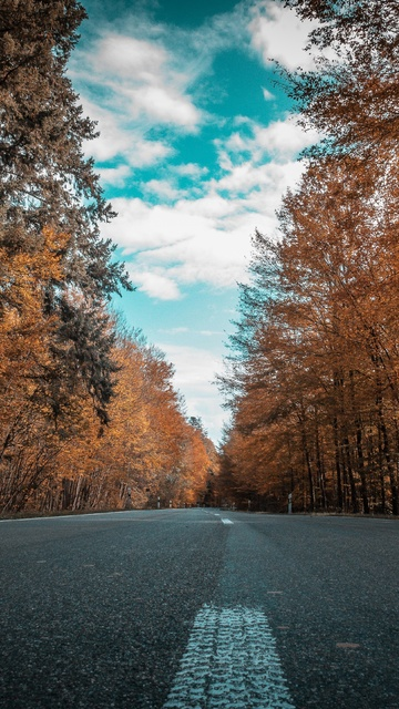 alone-road-forest-autumn-golden-trees-ultra-4k-n1.jpg