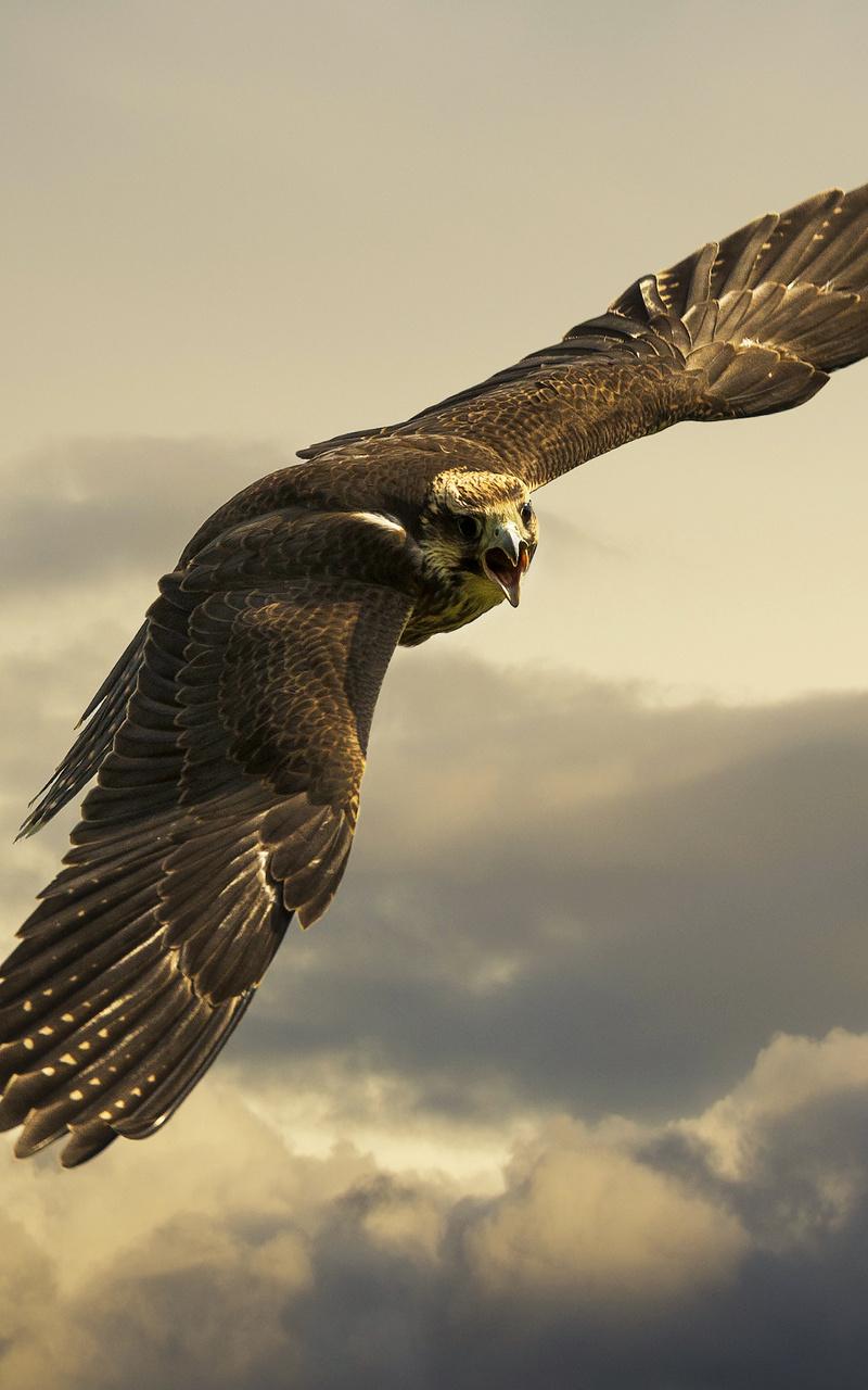angry-hawk-4k-j4.jpg