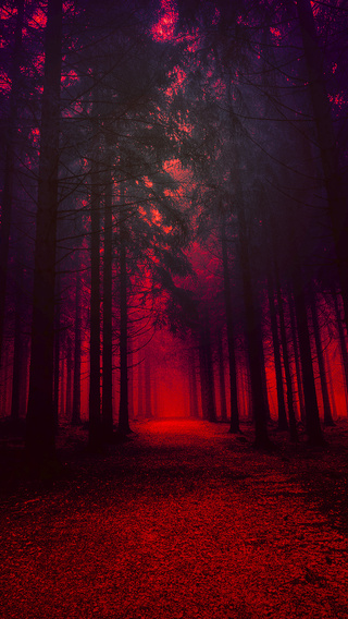 artistic-red-forest-23.jpg