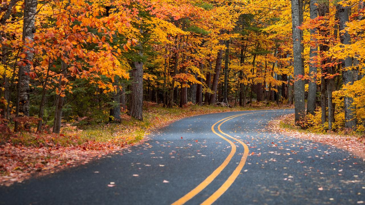 autumn-drive-road-4k-dz.jpg