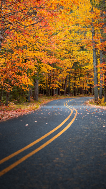 autumn-drive-road-4k-dz.jpg