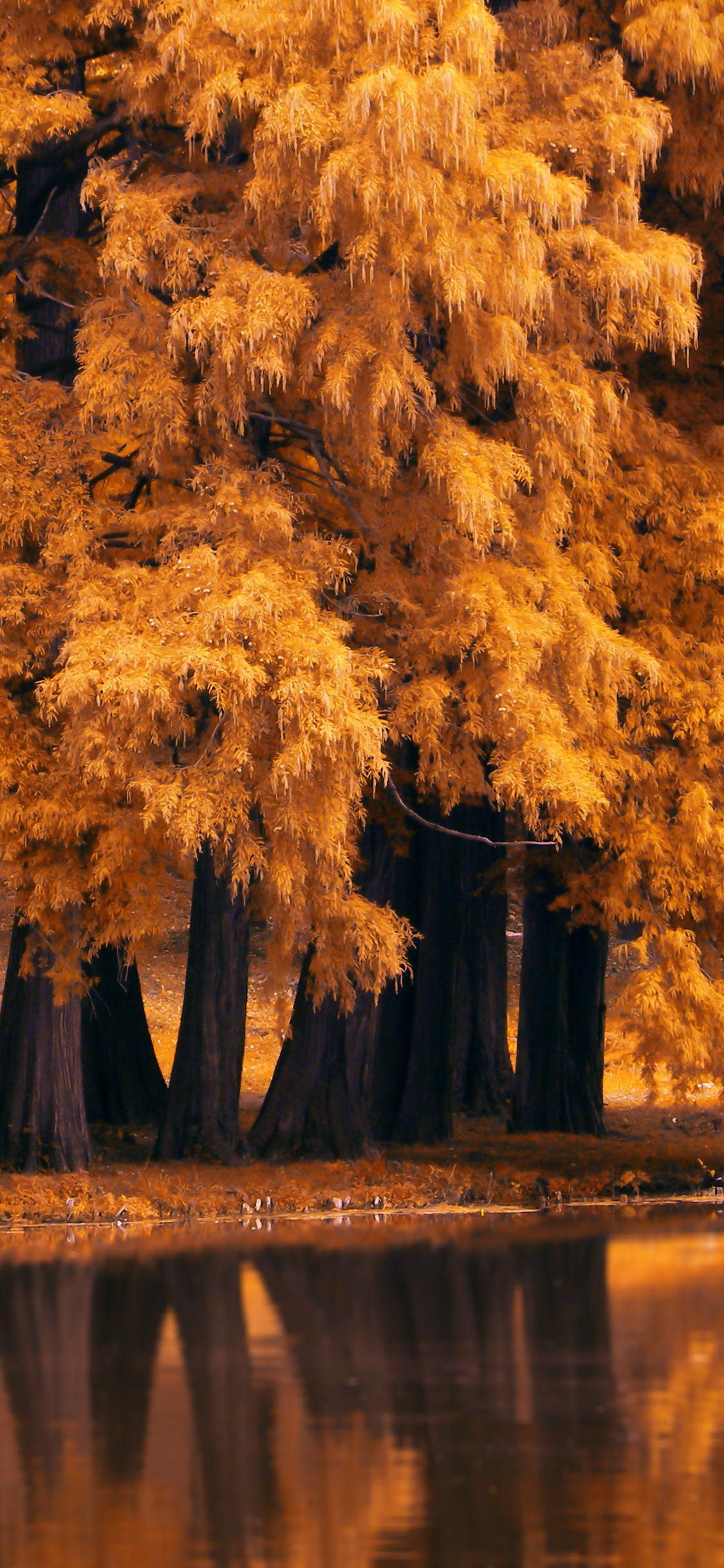 1125x2436 Autumn Fall Nature 4k Iphone Xs Iphone 10 Iphone X