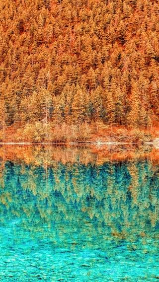 autumn-fall-orange-green-trees-outdoors-5k-kk.jpg