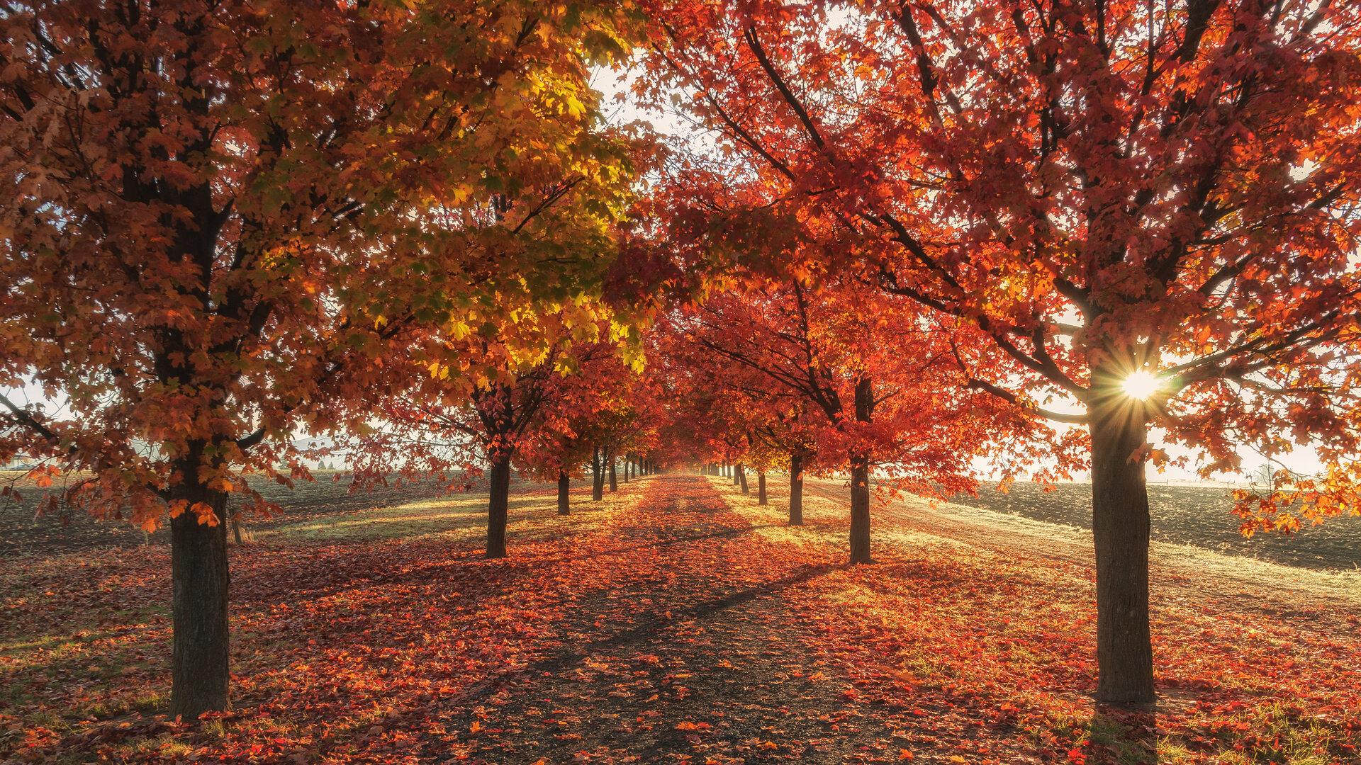 podzim les
