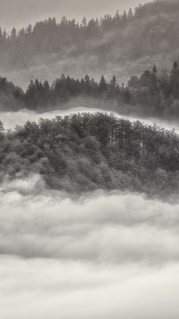 autumn-fall-trees-5k-xg.jpg