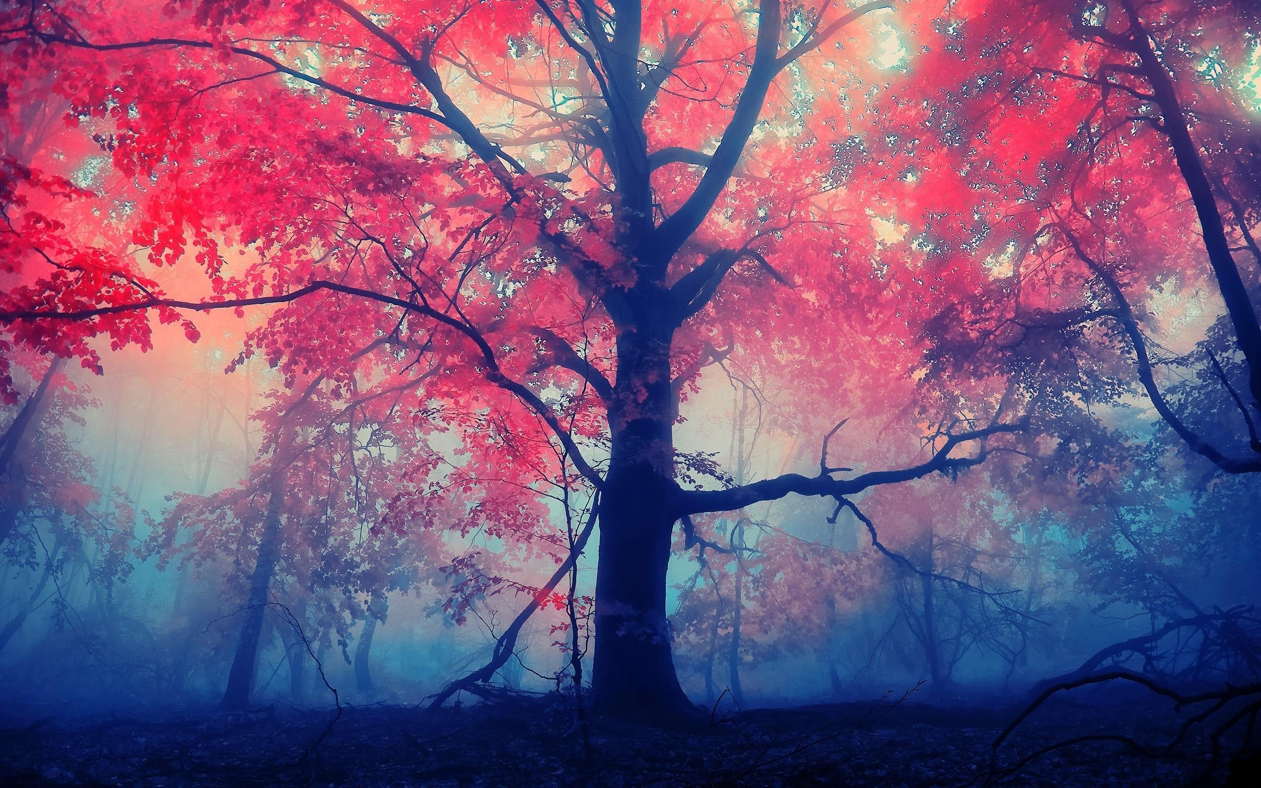 красные деревья  № 1276226 загрузить